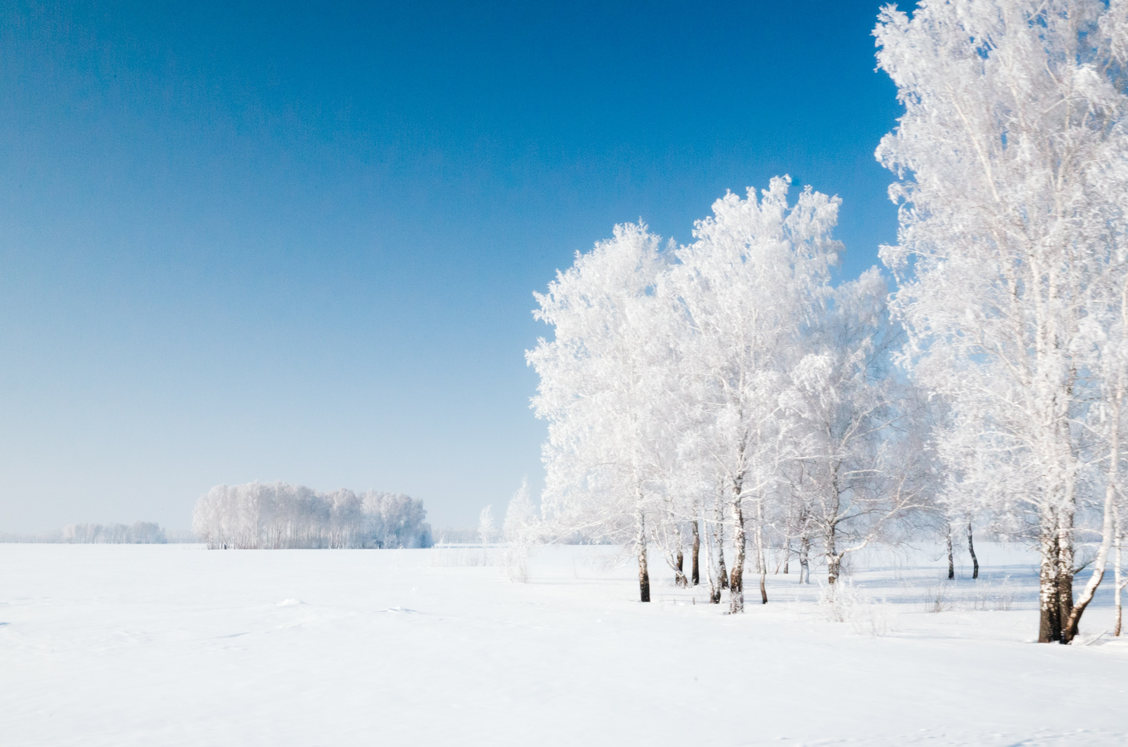 photo of bare trees covered with snow
