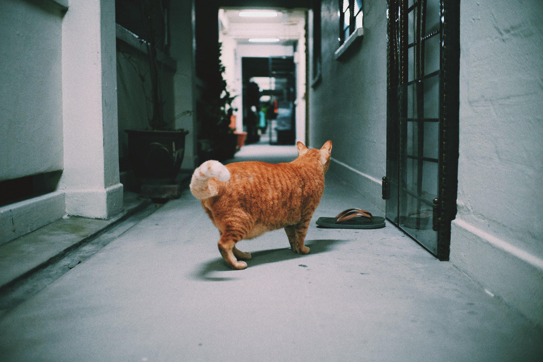 orange cat standing on gray concrete pathway