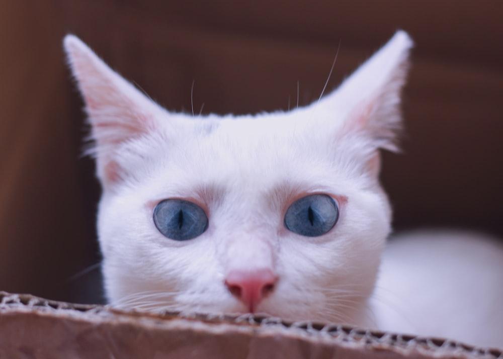 white cat on box