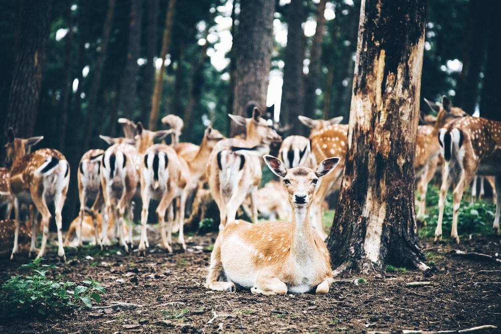 group of deer in forest during daytimer