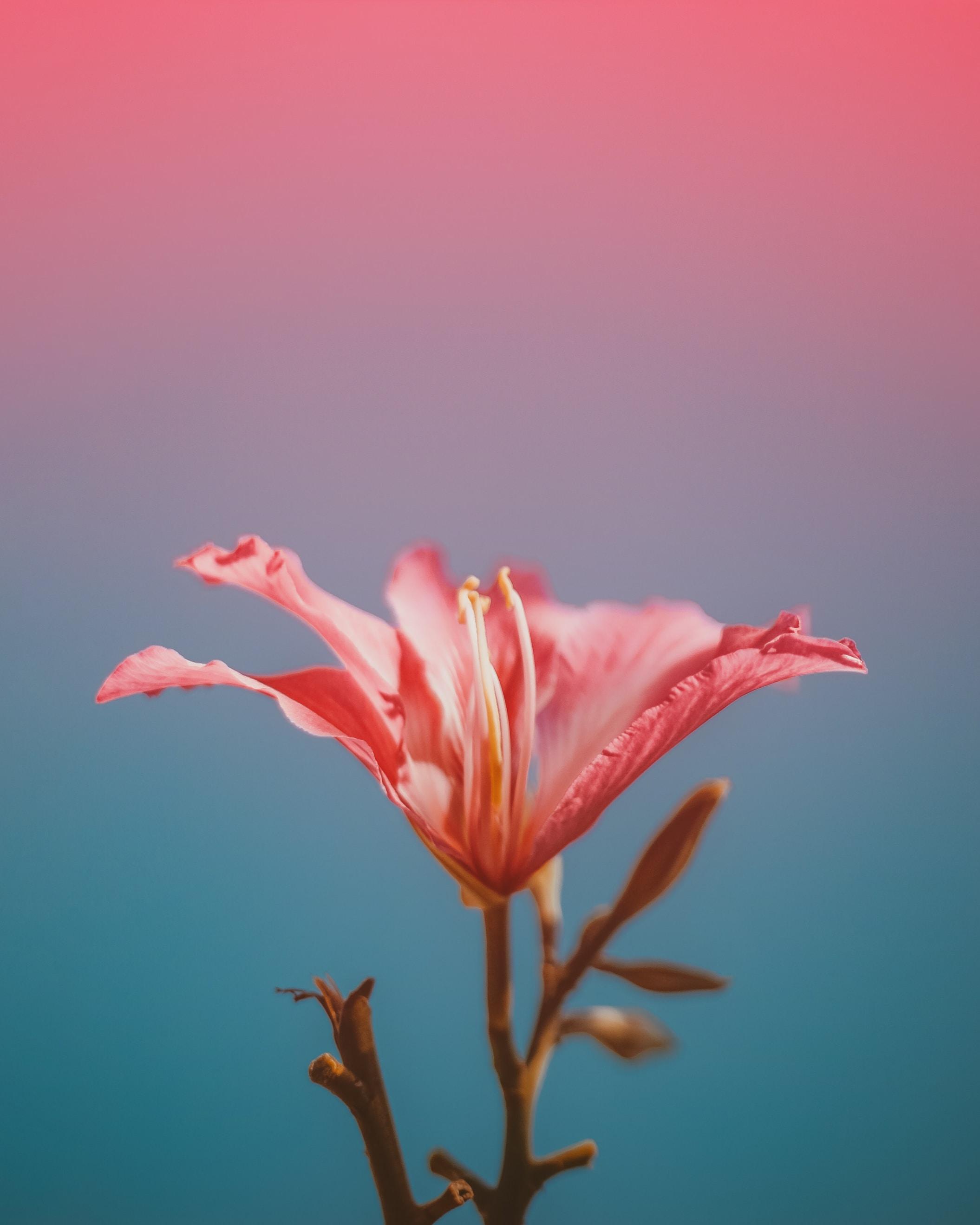 pink flower closeup photo