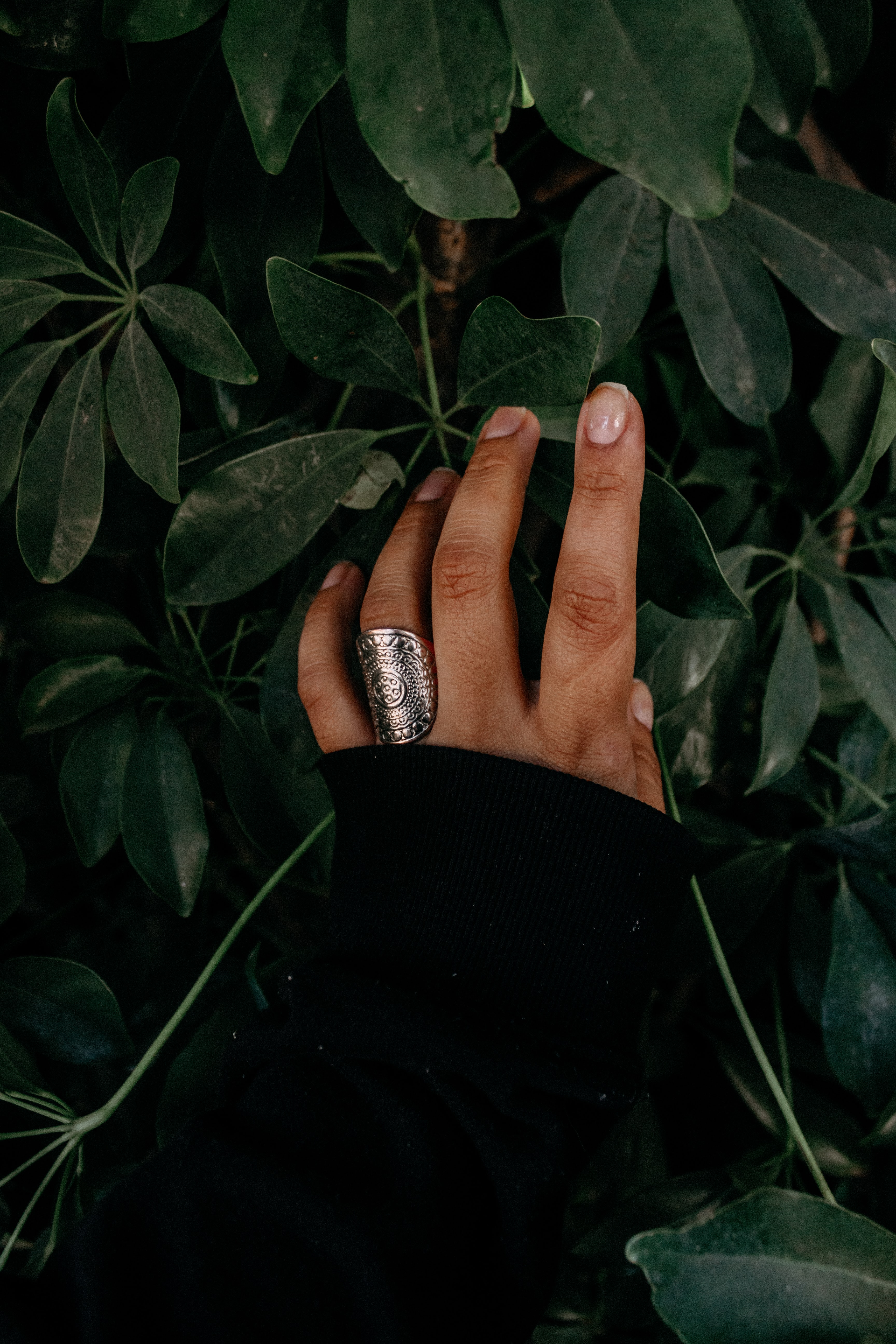 person wearing silver-colored ring and holding green leaves