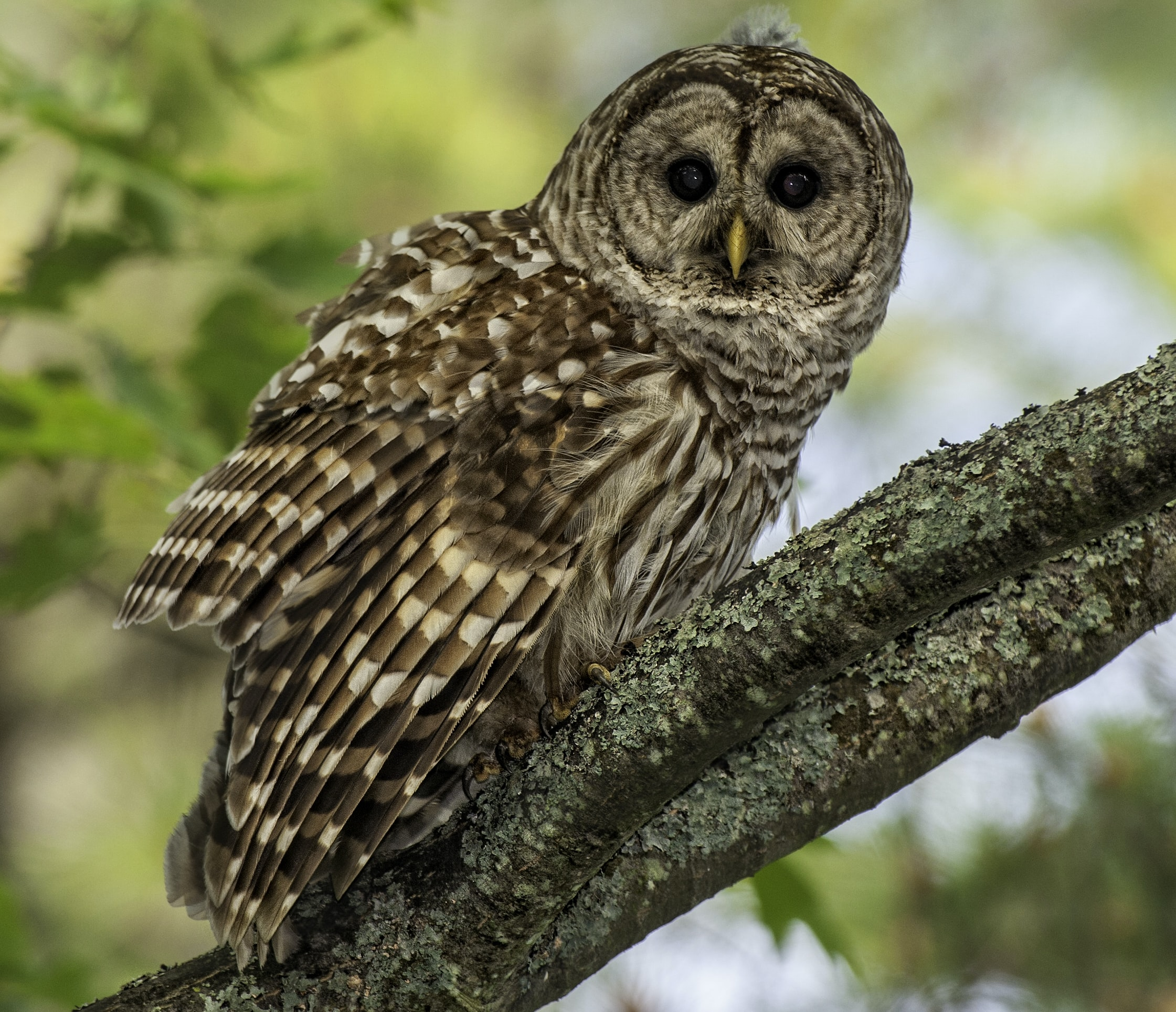 brown owl perched on brown wooden tree during daytime