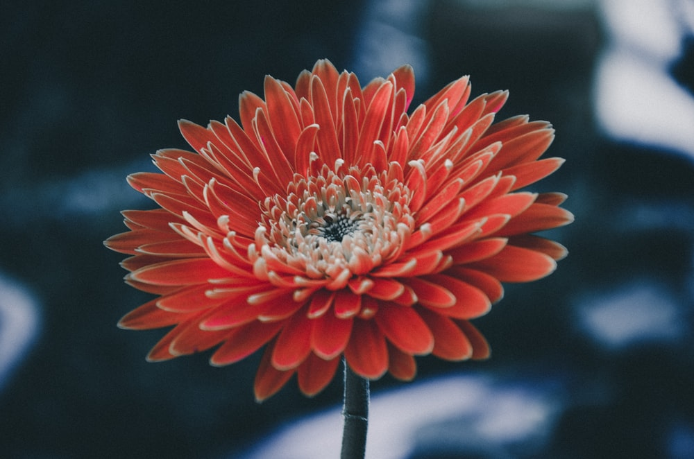 red flowers in shallow focus photography