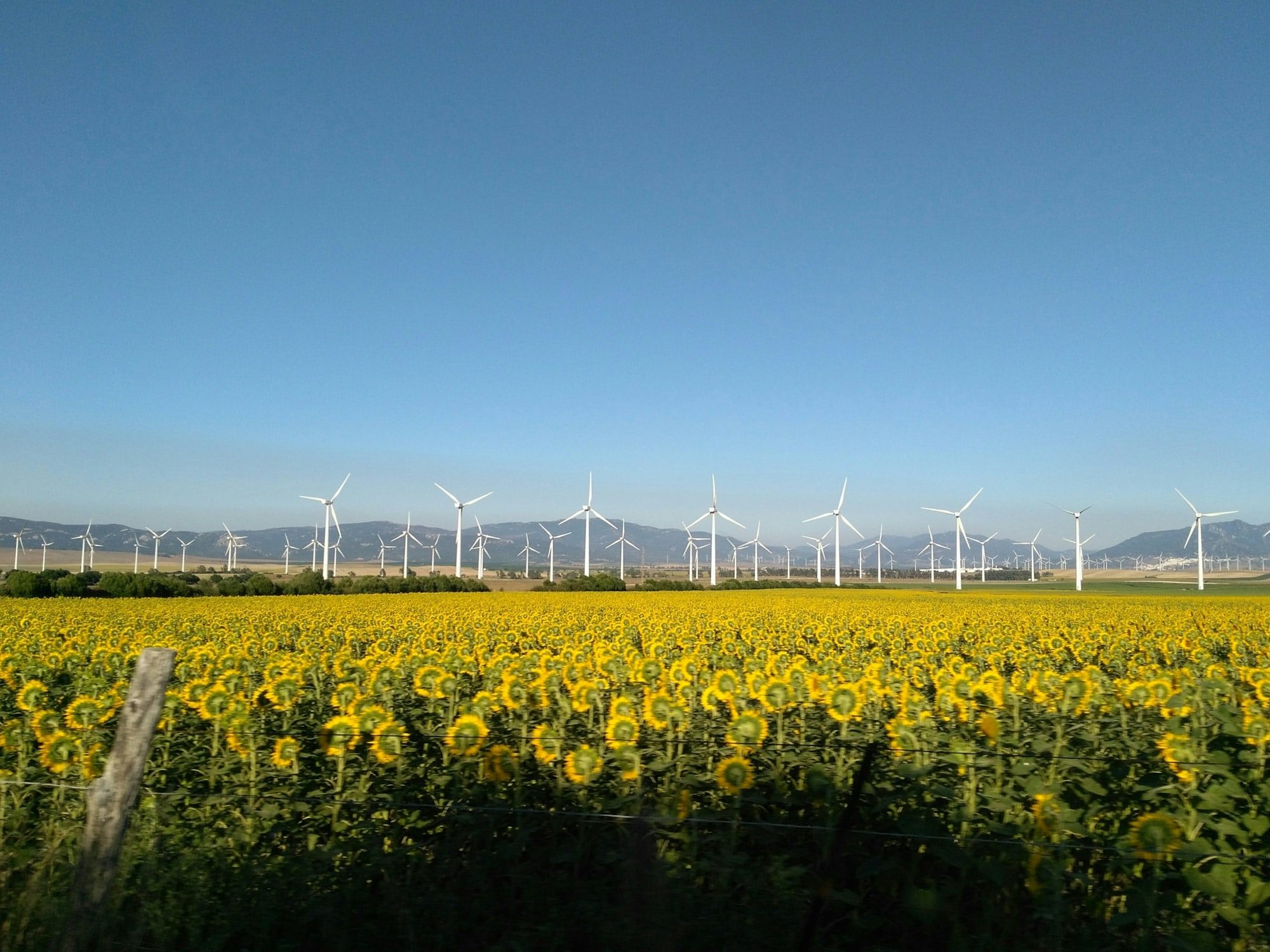 This picture was taken during a trip between Sevilla and Marbella. I focus the camera to the windmills to contrast with the sunflowers moving on purpose so did we drive the car to get this effect. It was a family trip full of amaizing vews on the road.