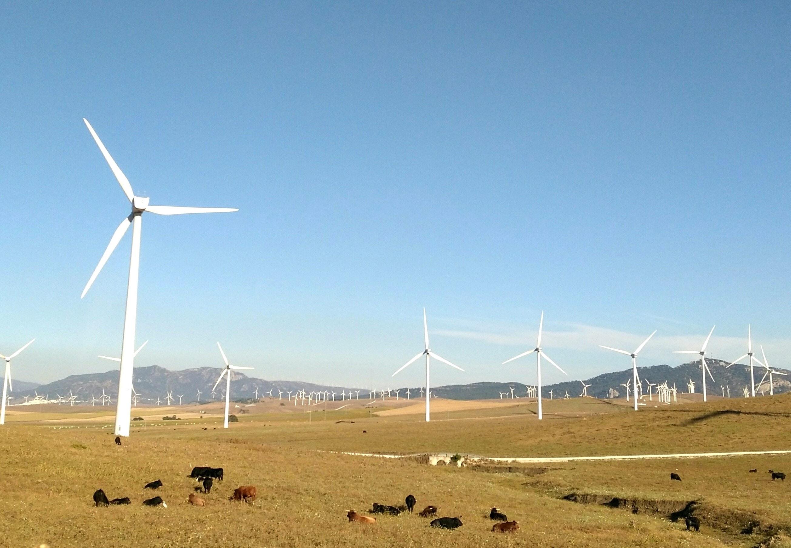 wind turbines on grass field