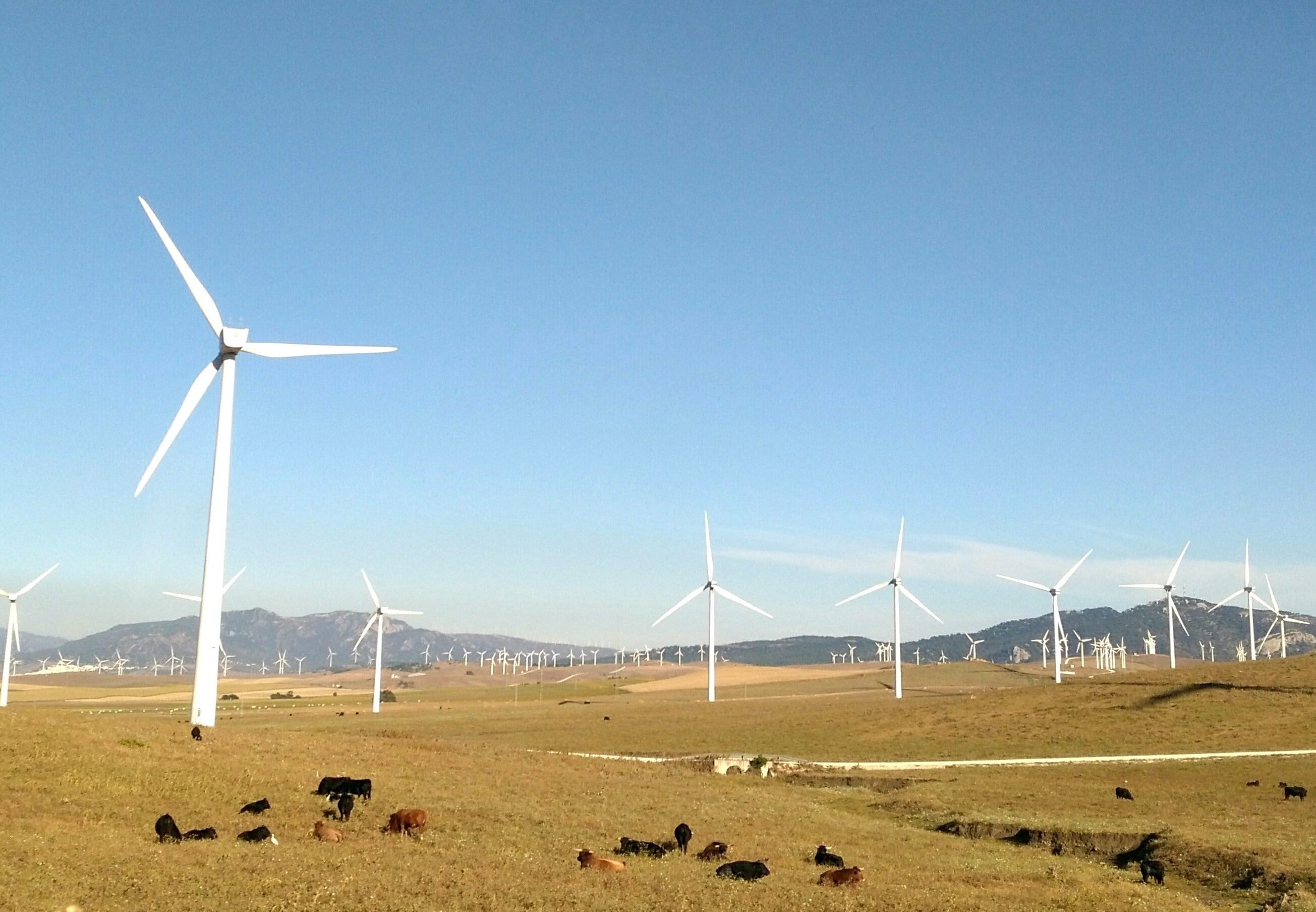 wind turbines on grass field