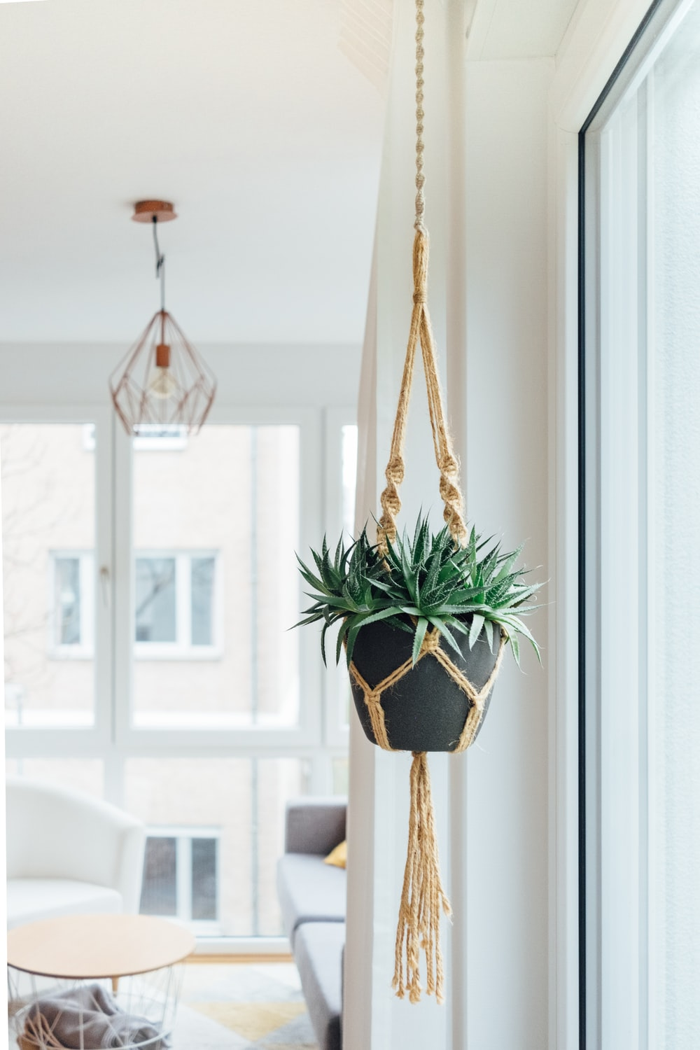green hanging potted plant near glass window at daytime