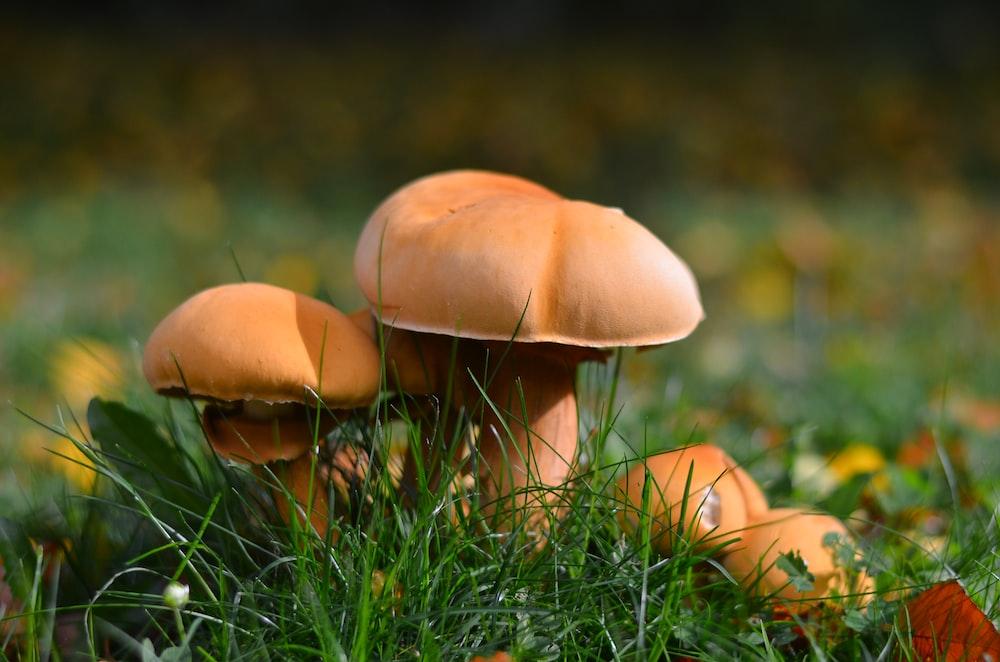 closeup photography of brown mushroom