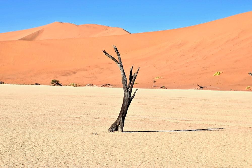 brown driftwood on desert