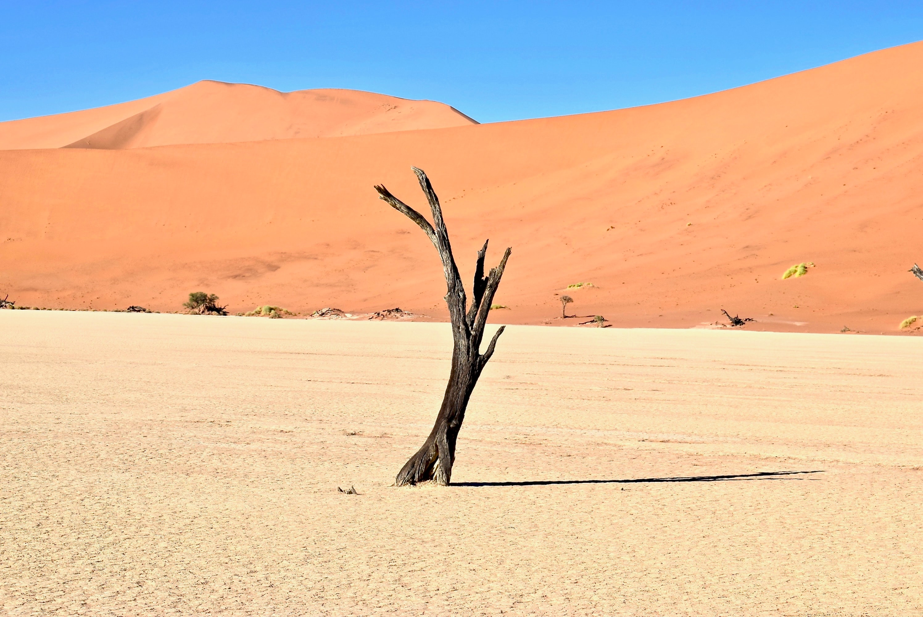 brown driftwood on desert