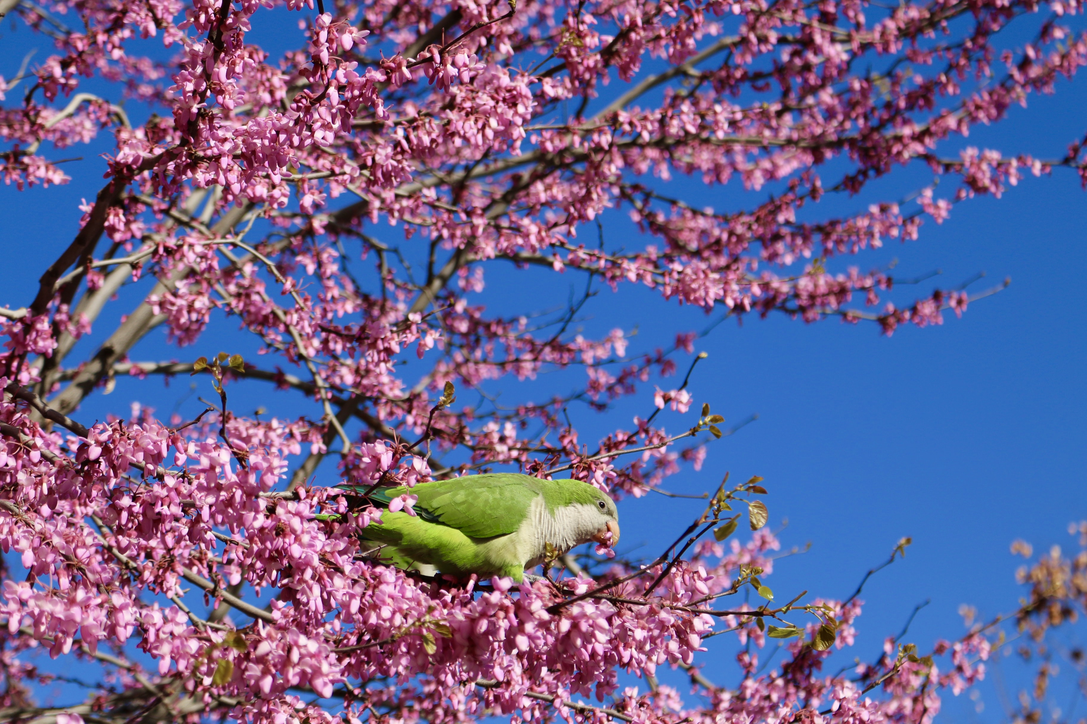 green bird on pink petaled tree during daytime photography