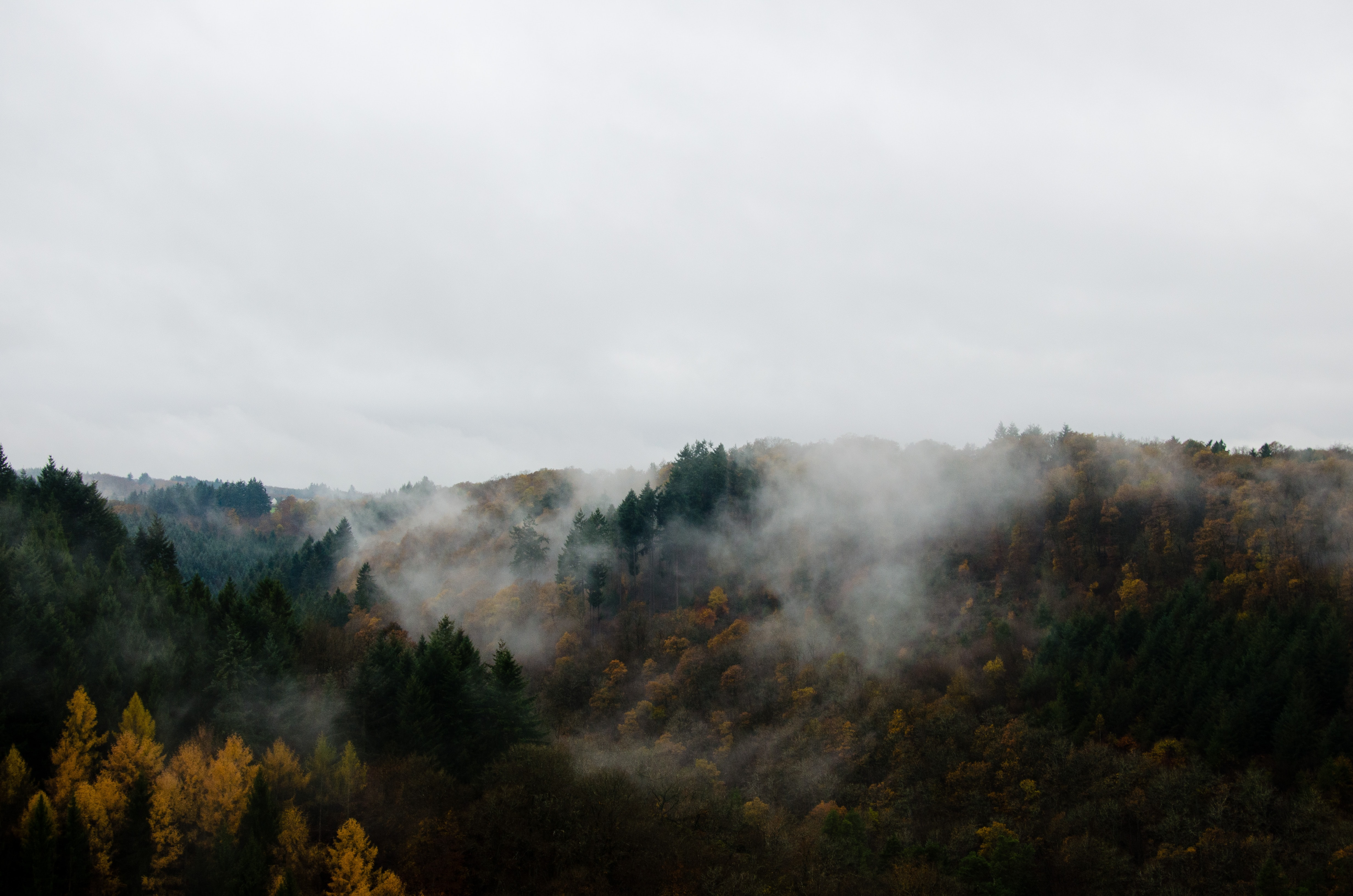 green and brown trees covered with fog