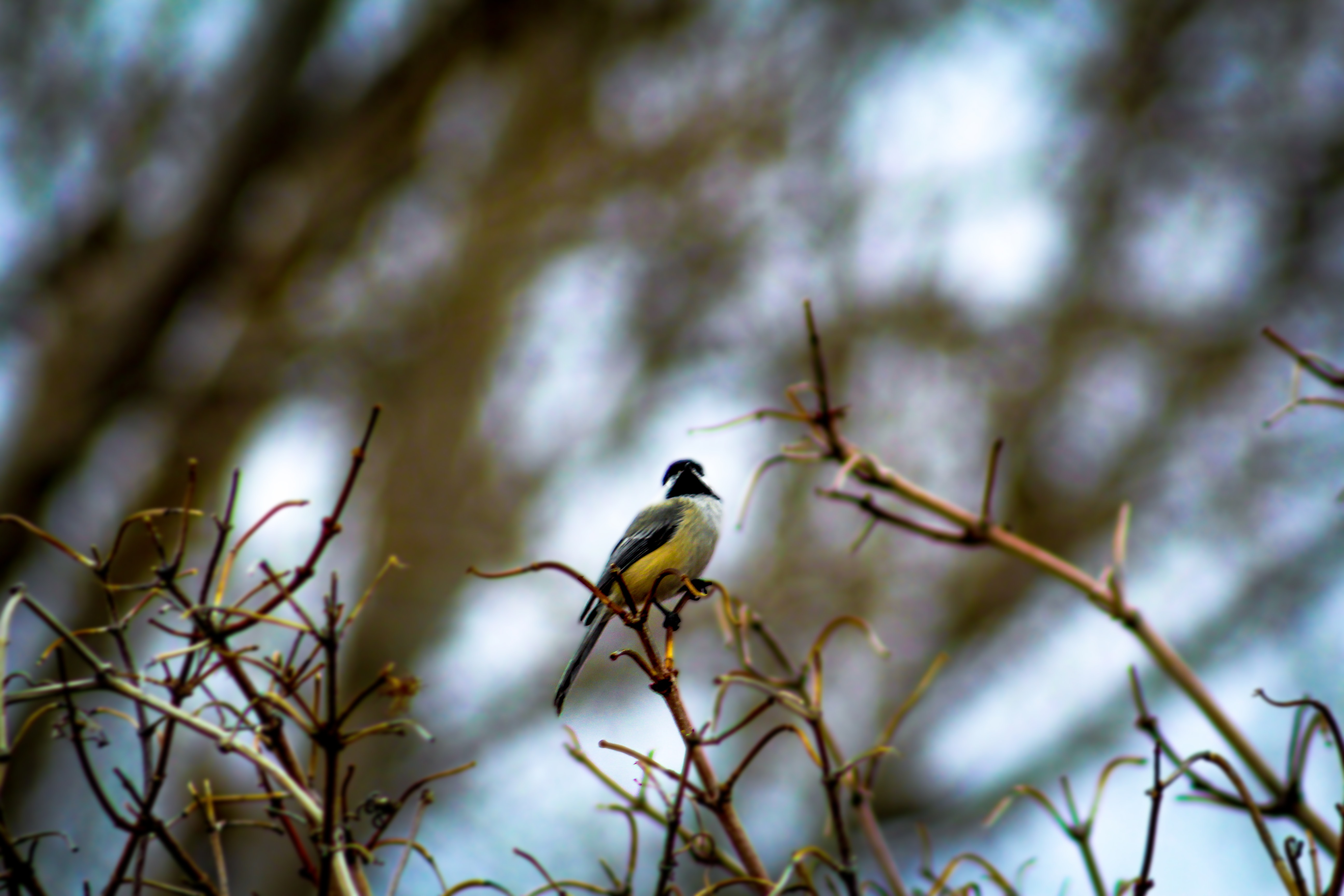 black and yellow bird on the plant