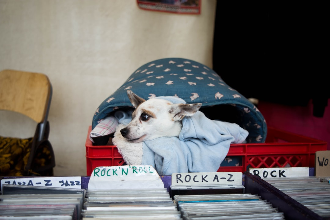 Dog Pet Canine And Records Hd Photo By Moshe Schneider