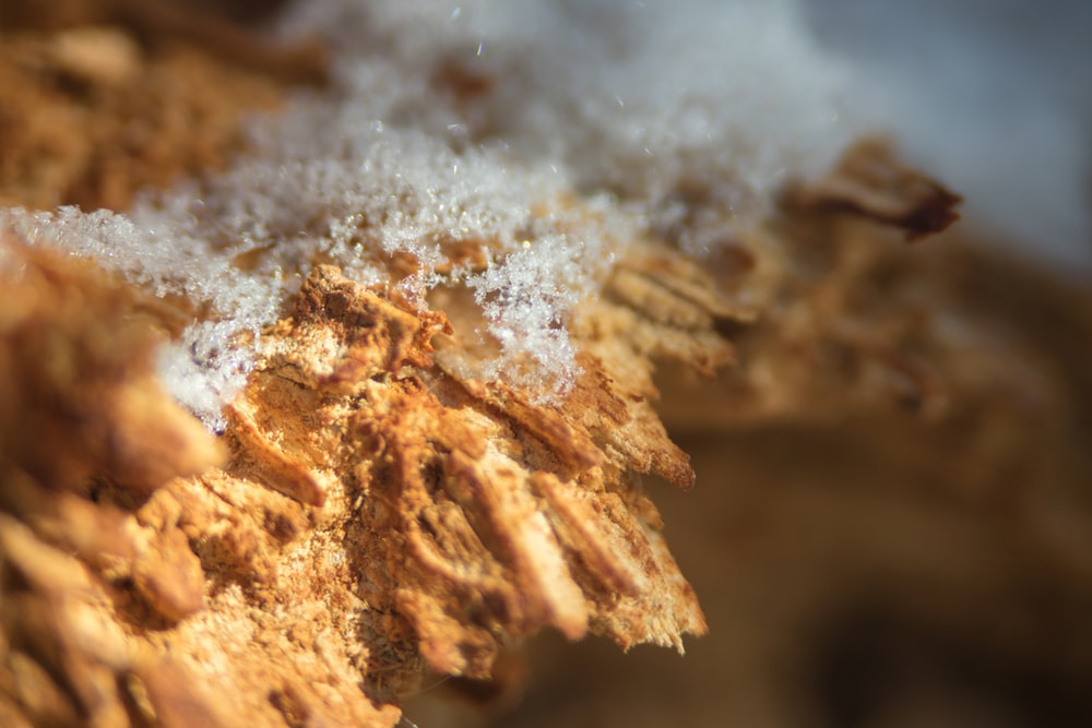 brown and white powder in close up photography