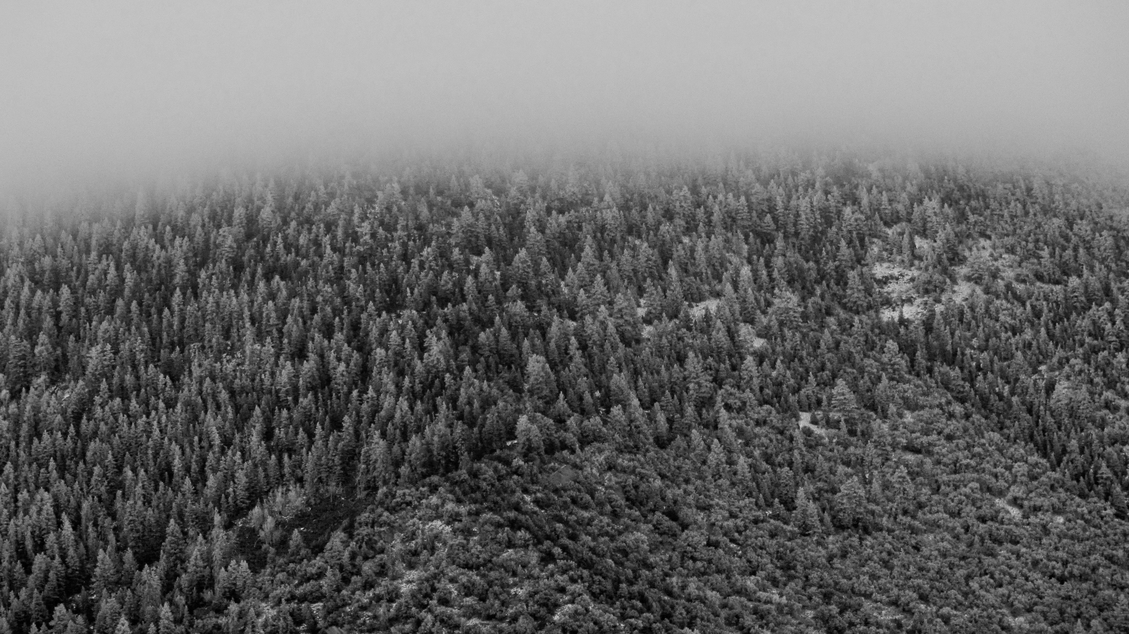 grayscale photo of forest