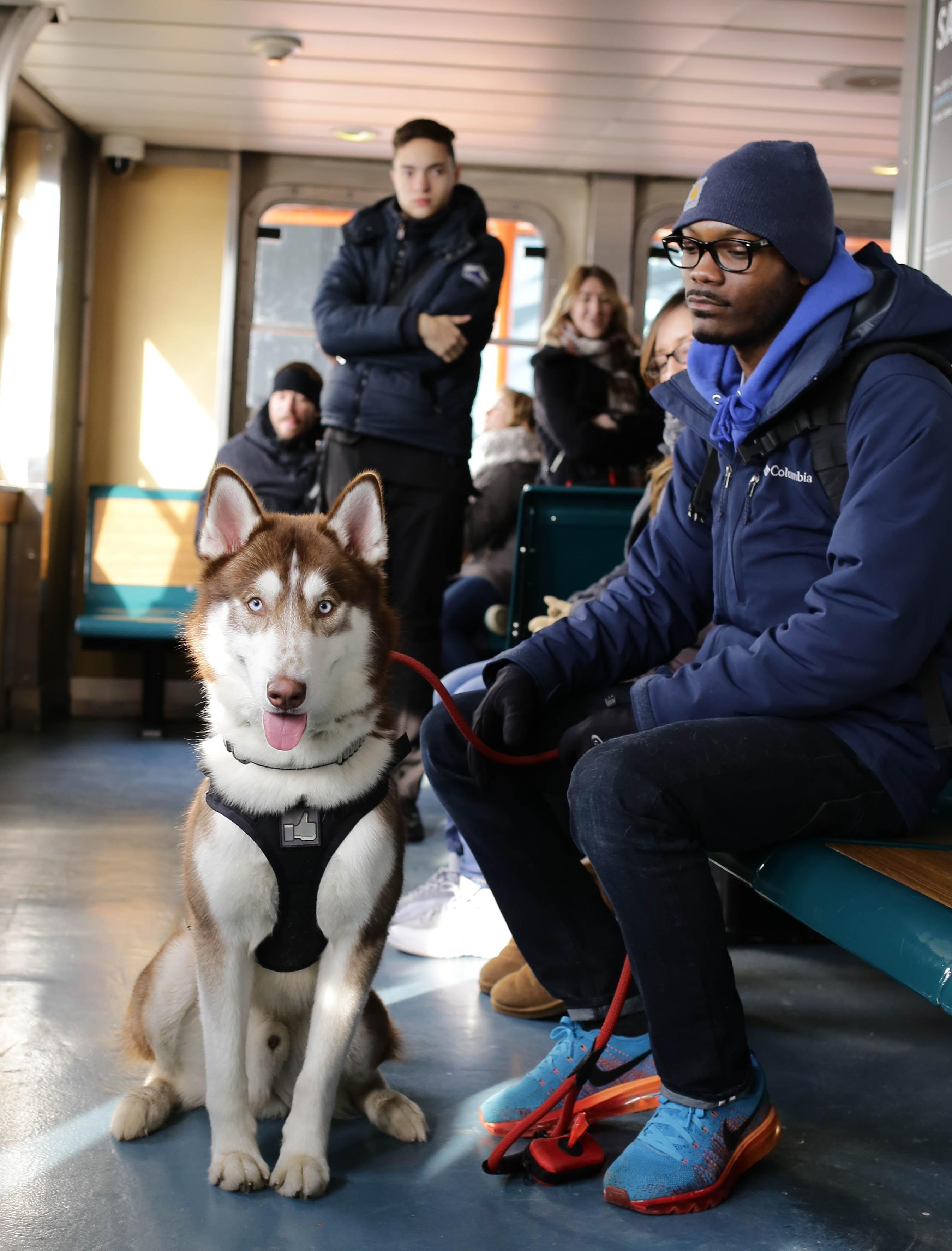 Siberian Husky beside man sitting on bench inside room