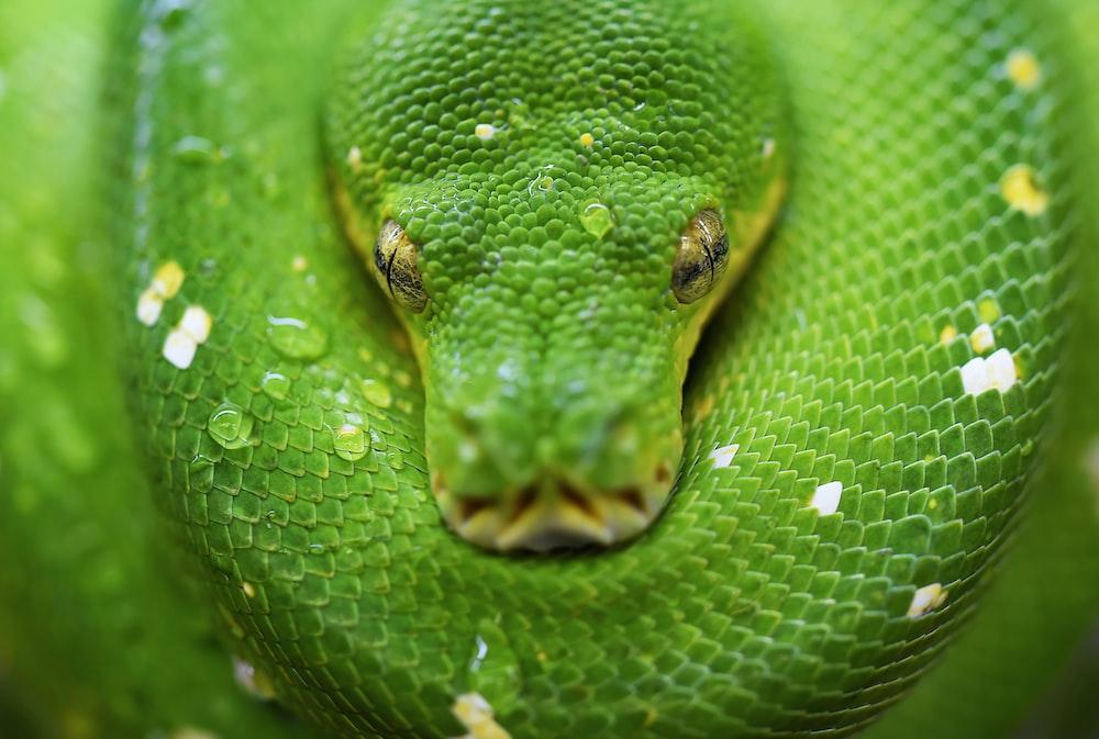 selective focus photo of green snake
