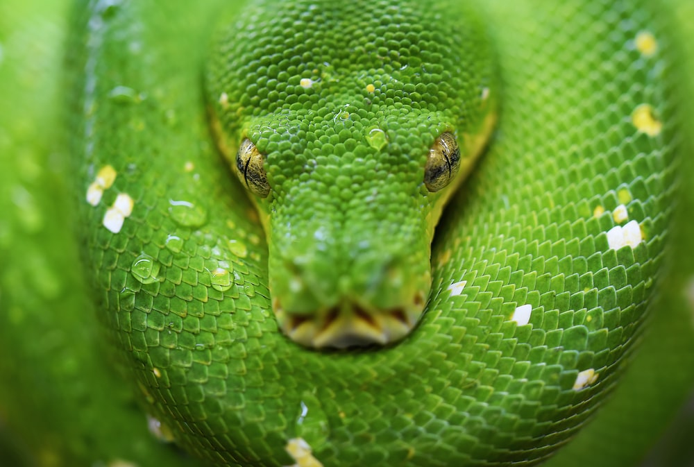 selective focus photo of green snake
