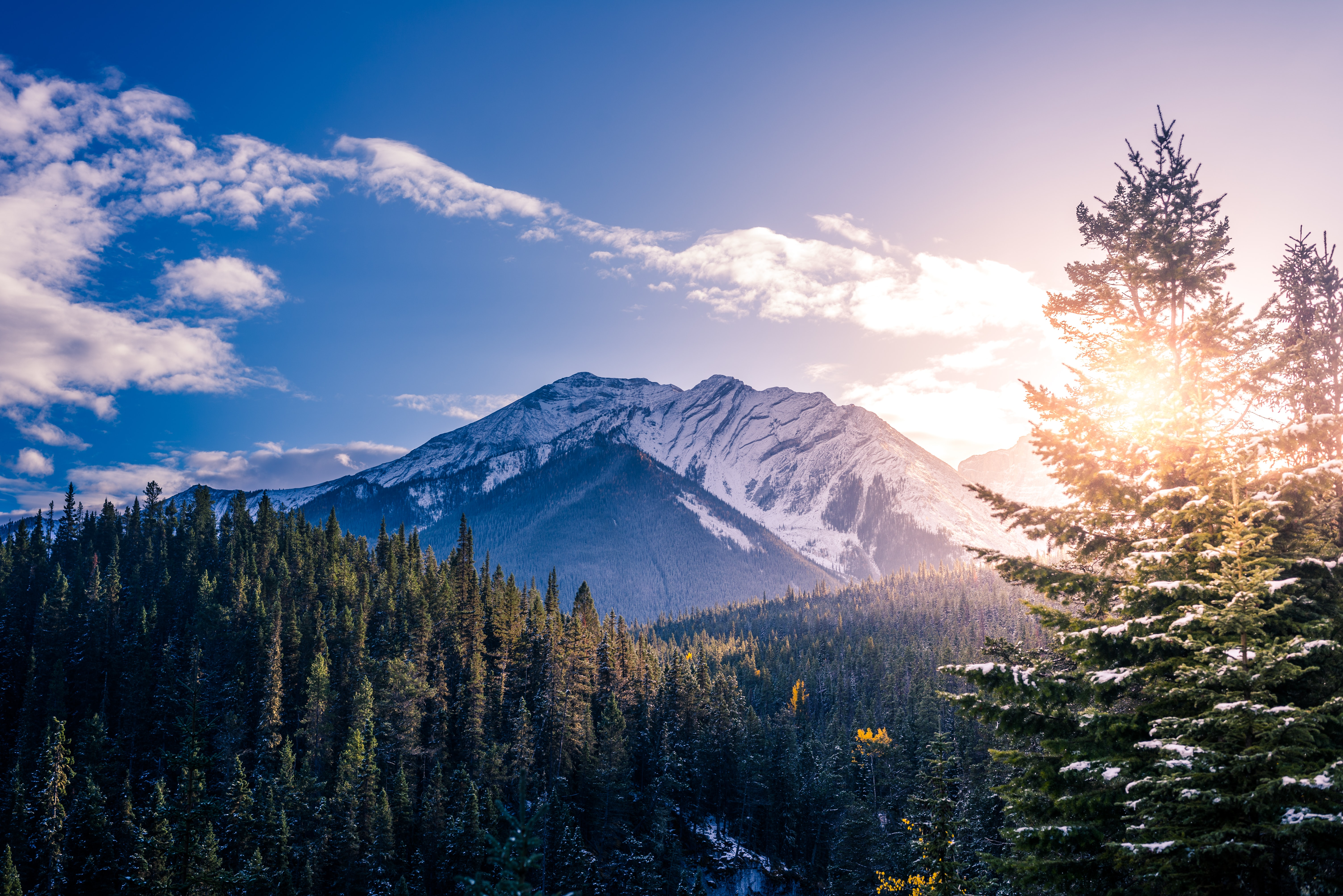 pine trees with background of mountain range