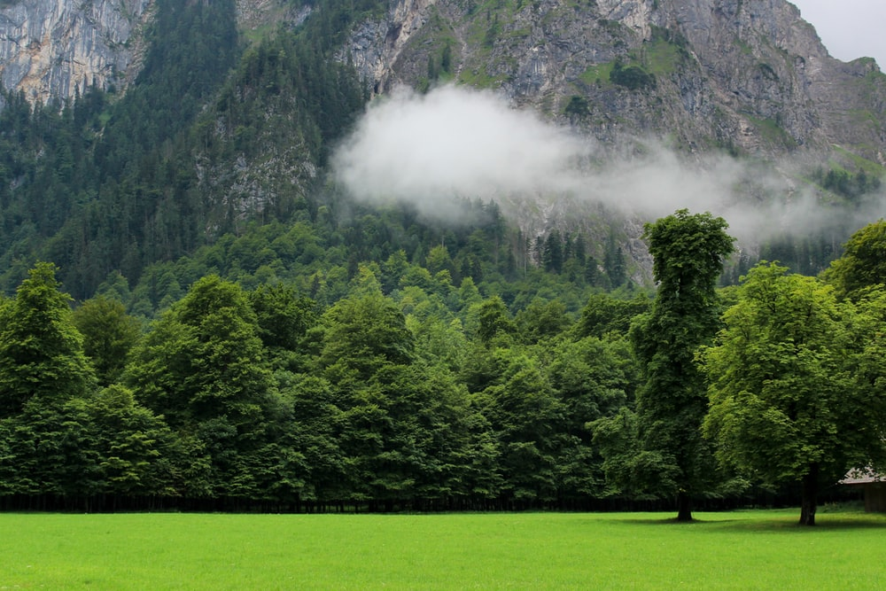 landscape photography of forest in front of mountain
