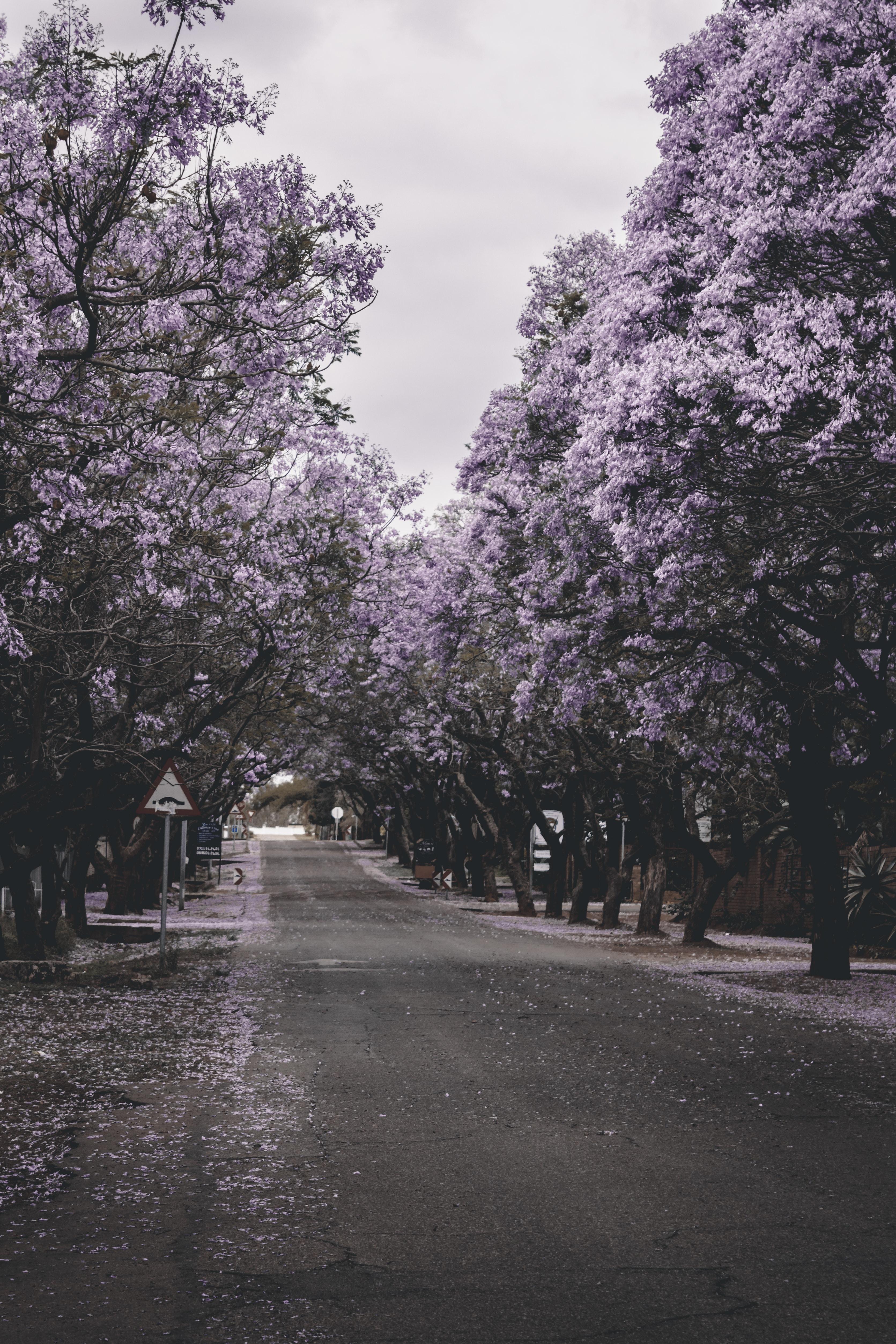 purple flowers threes