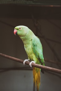 green parrot on tree branch during daytime