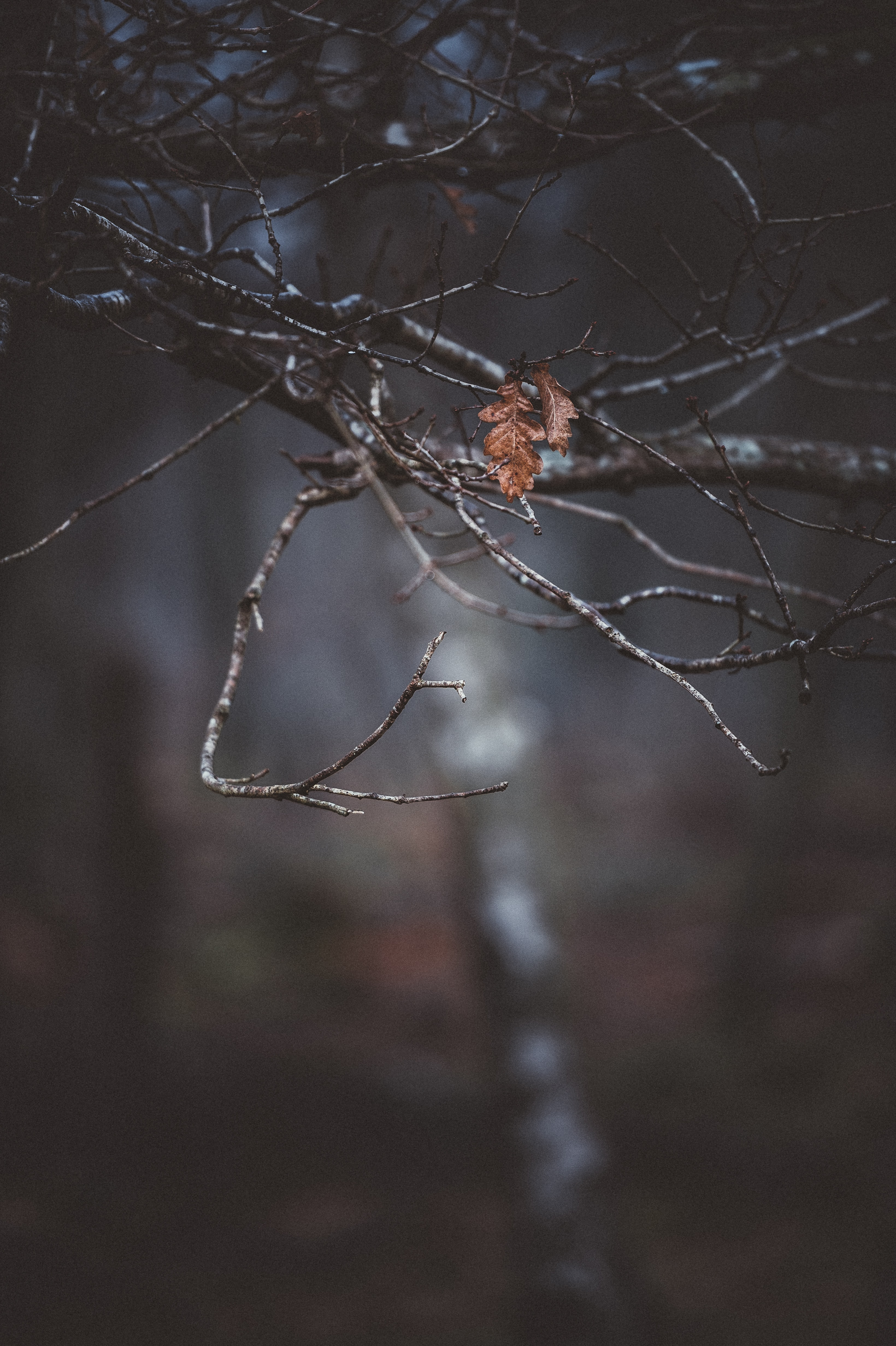 shallow focus photo of dried leaves on naked tree outdoors