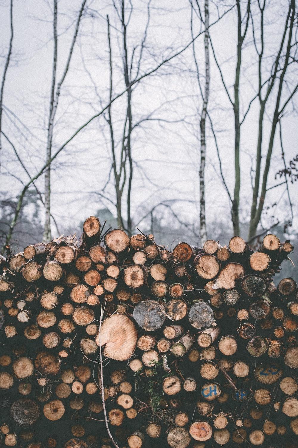 firewood near leafless tree
