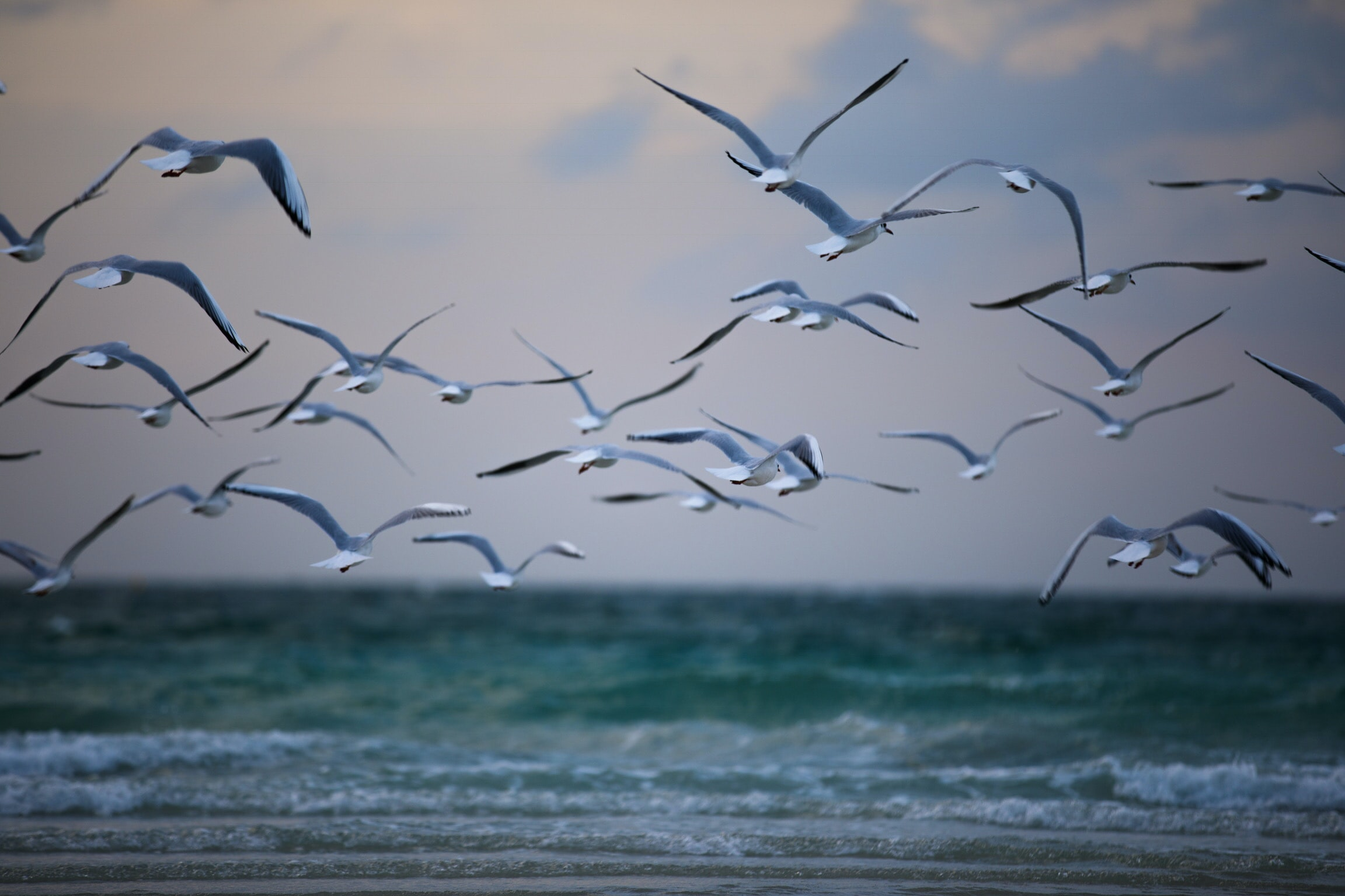 photography of birds flying in air