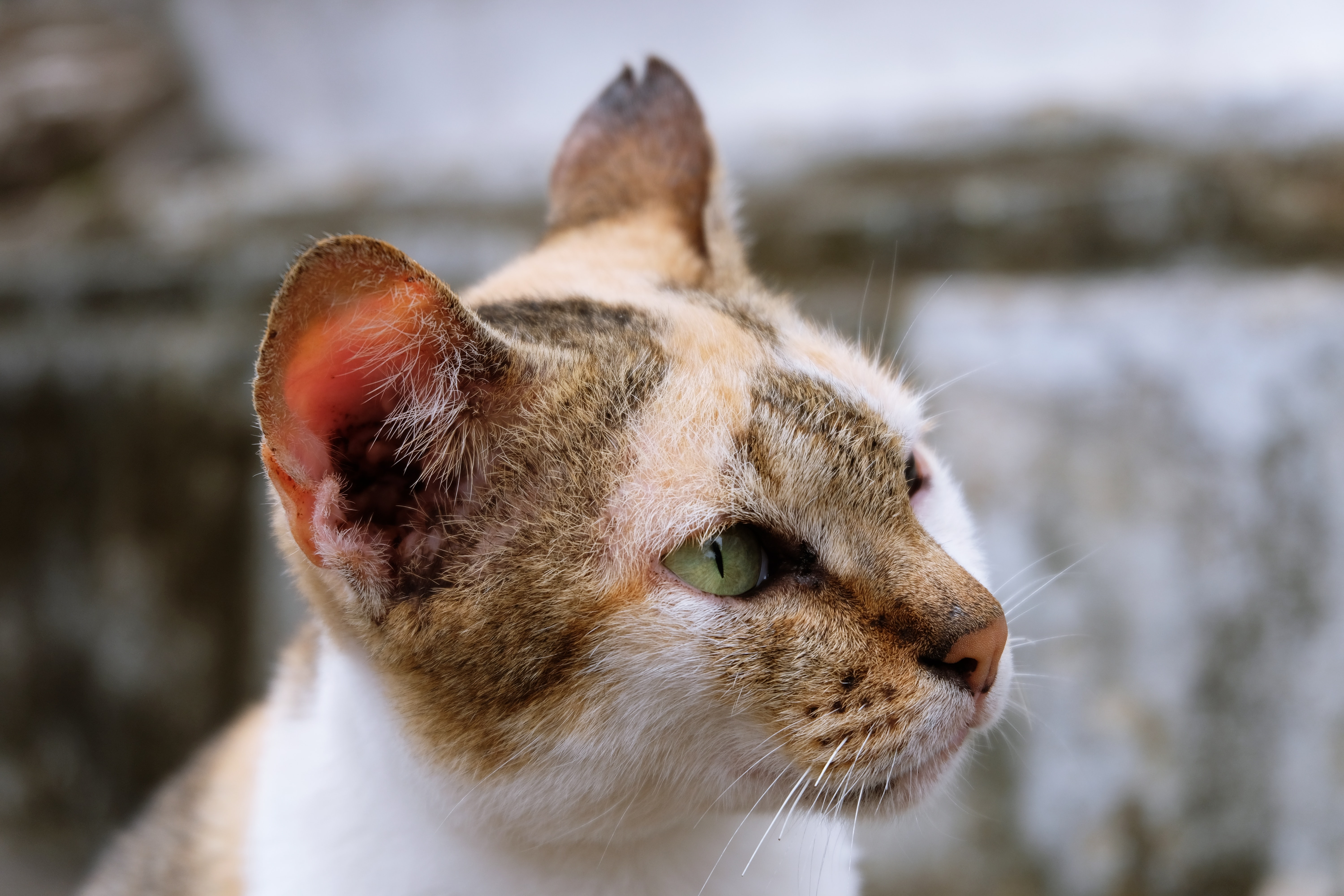 selective photo of yellow, white, and black cat taken at daytime