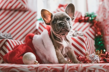 Photo for MOM's New Shopping Page with Christmas Puppy