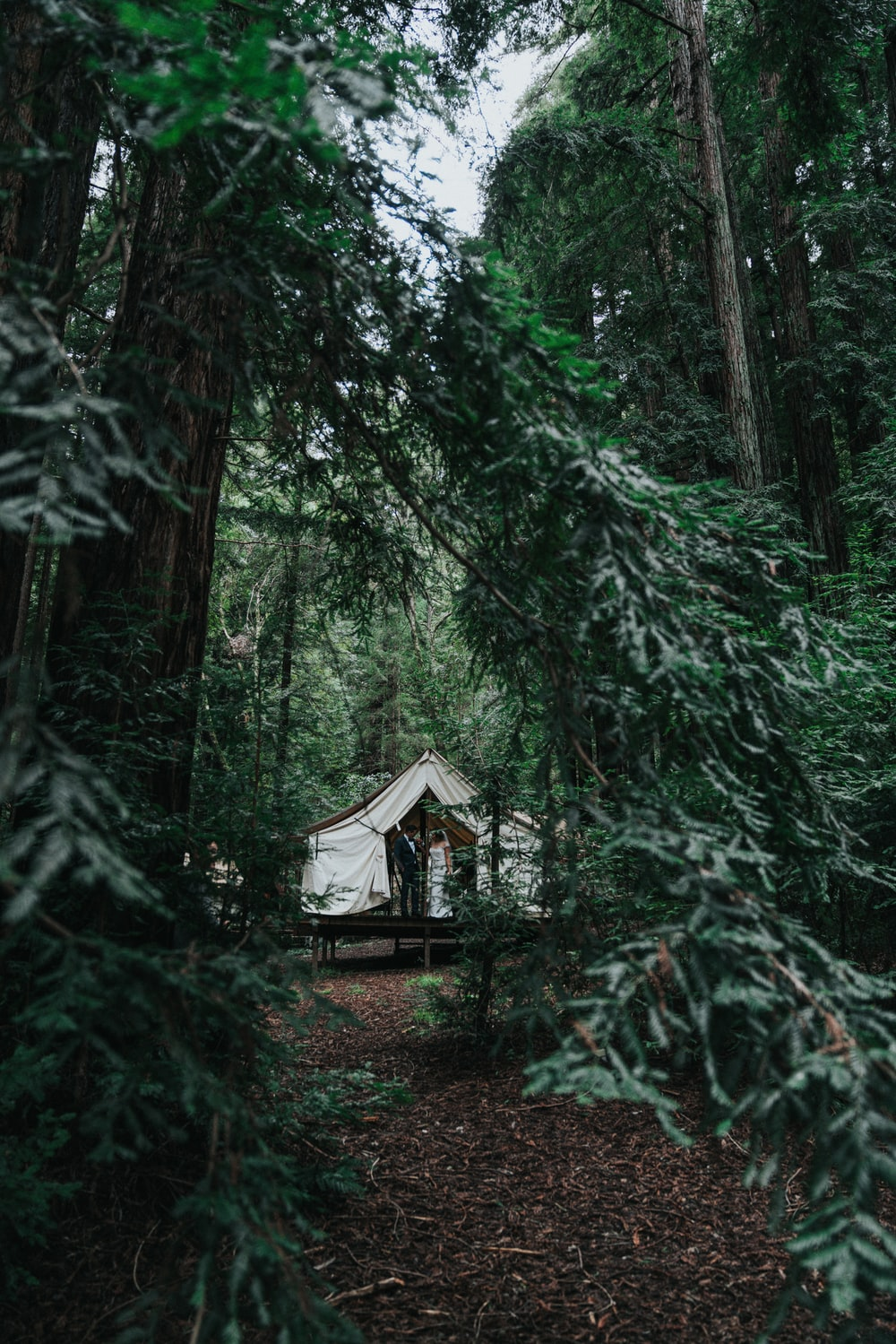 white canopy tent in middle of forest