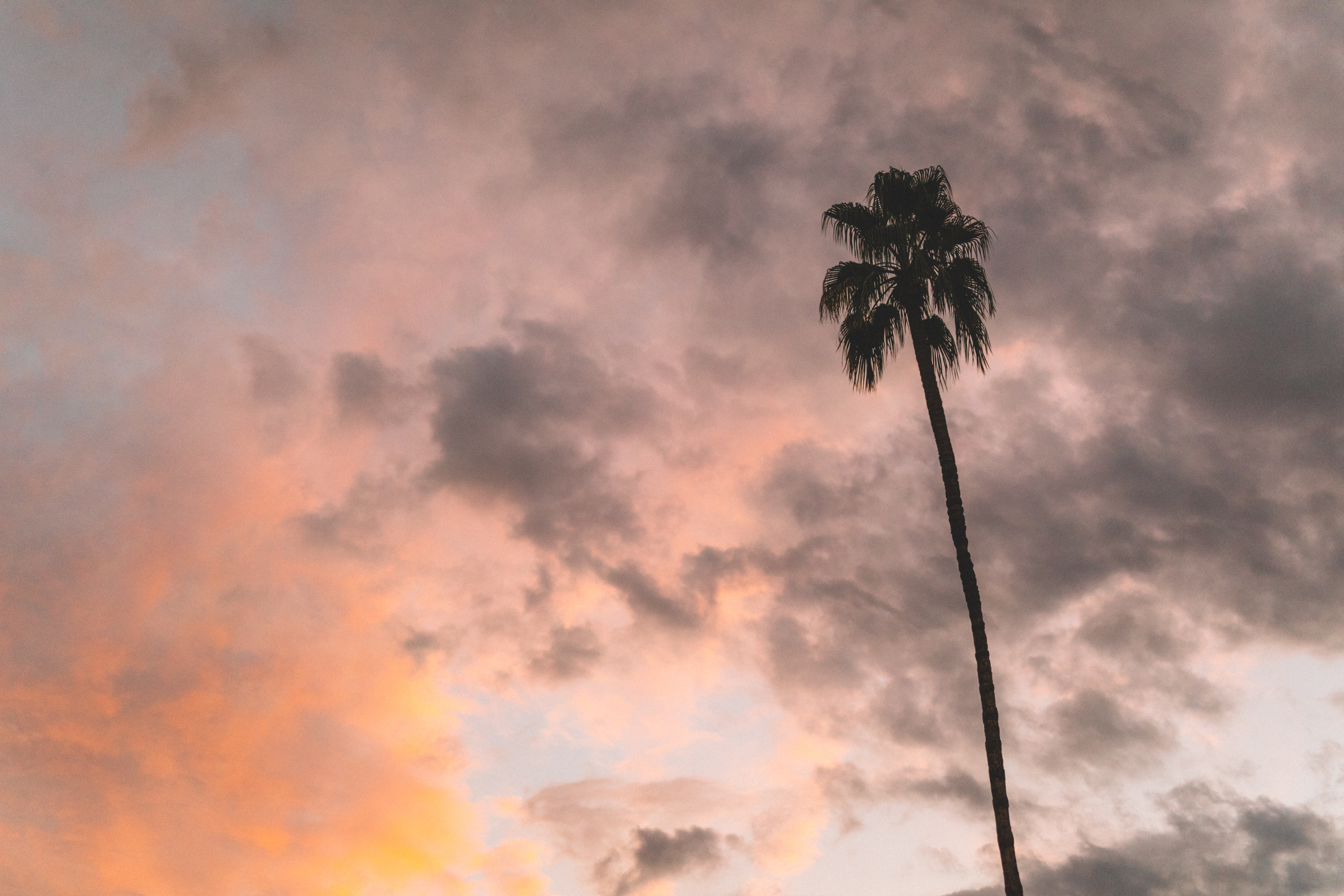 coconut tree under gray and orange cloudy sky