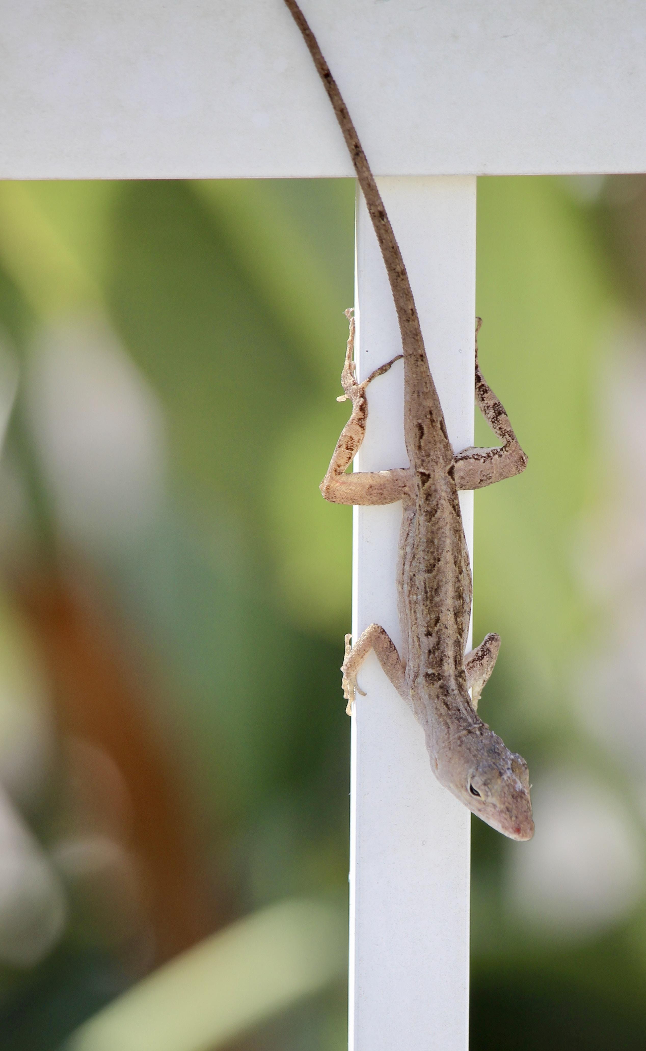brown lizard in bokeh photography