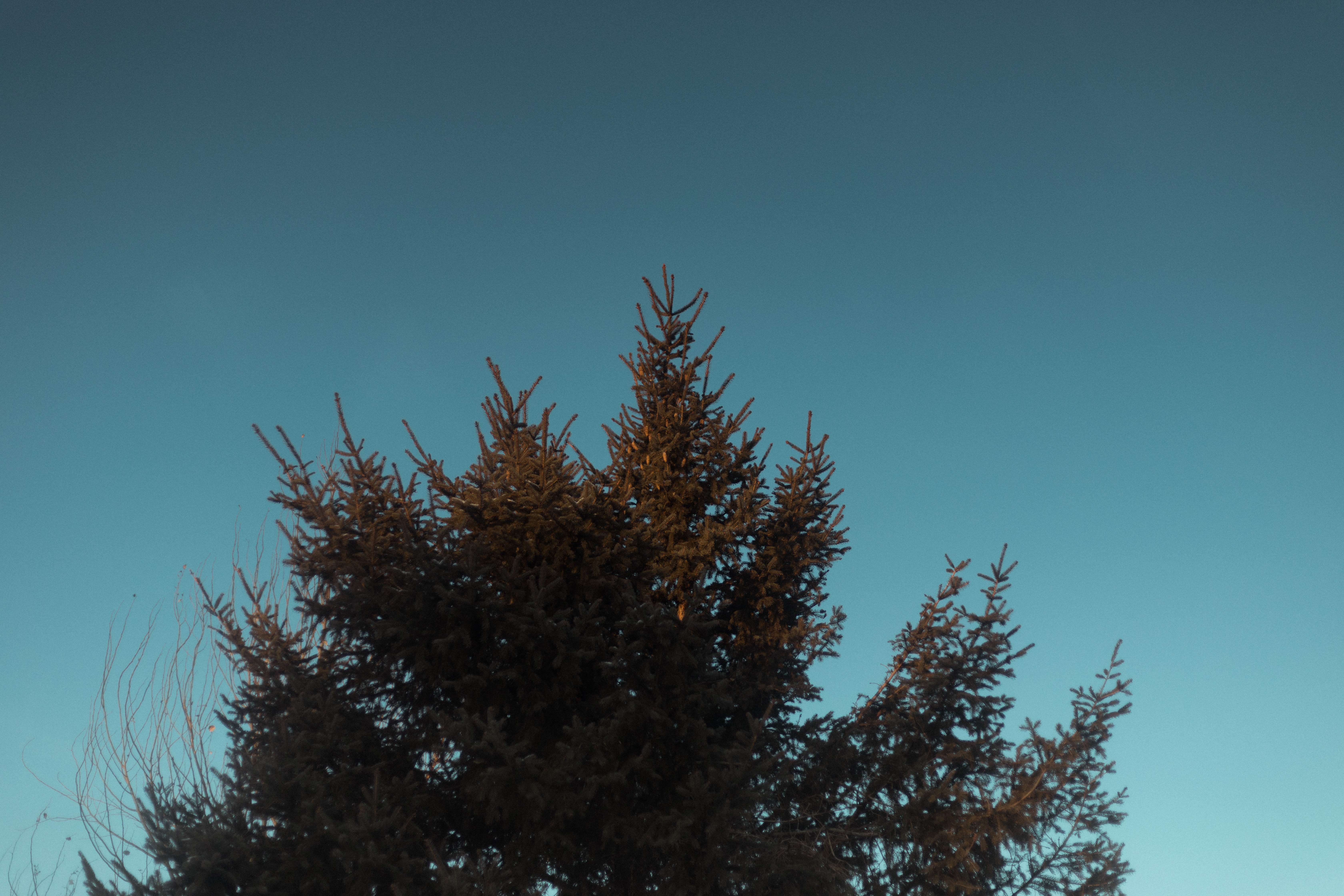 green leafed tree under blue sky