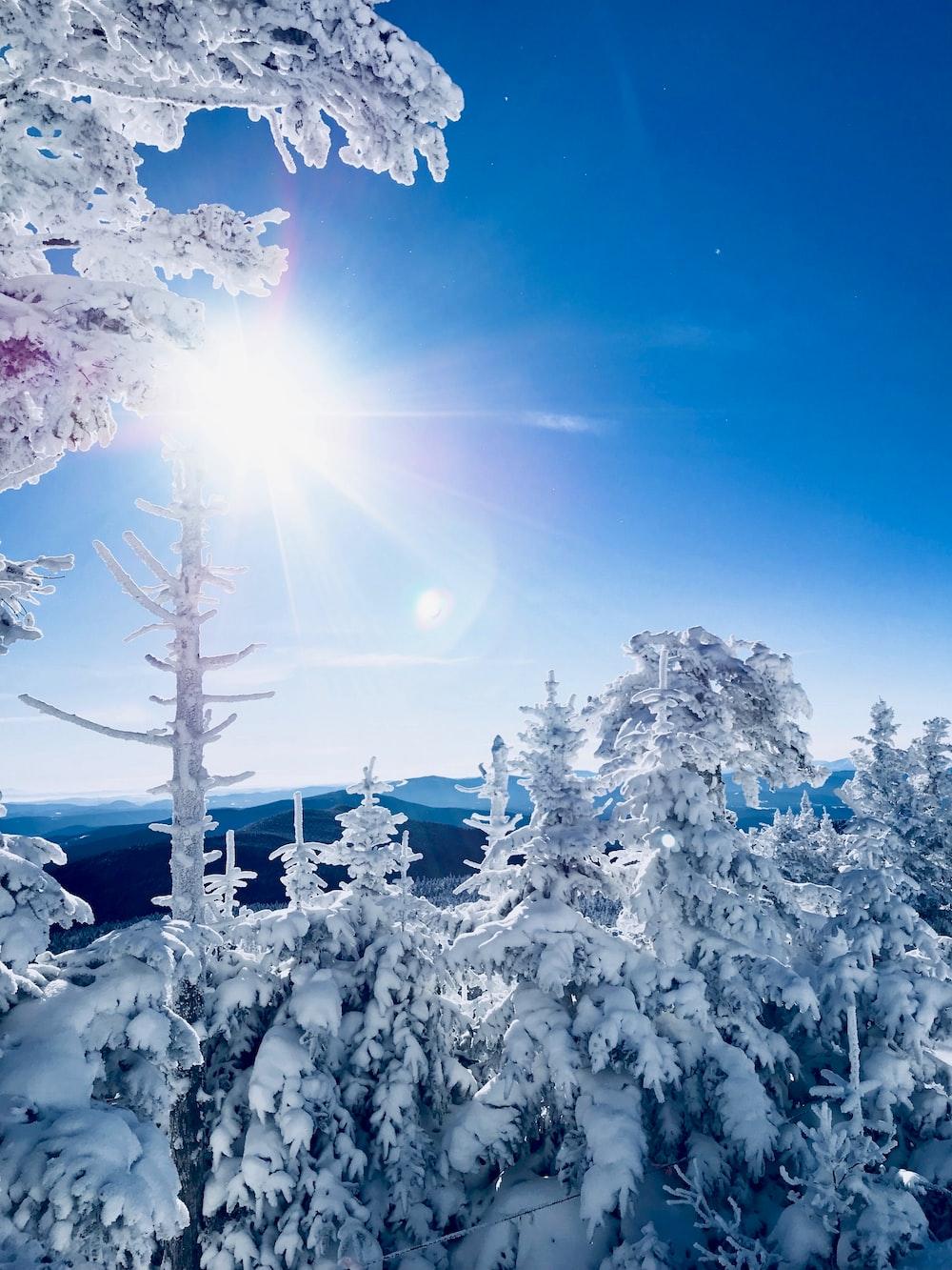 tundra trees under sun