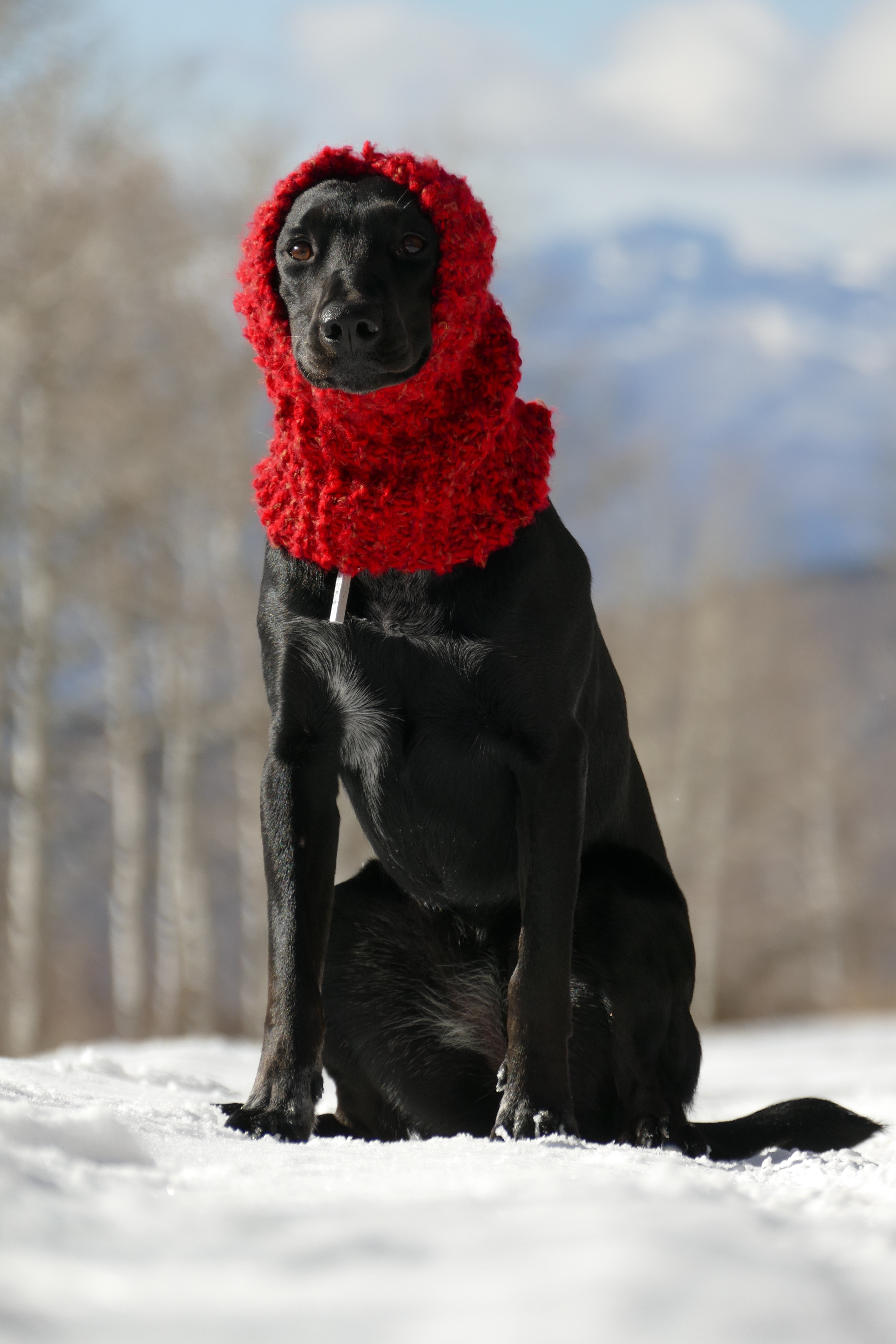 black dog sitting on snow wearing beanie