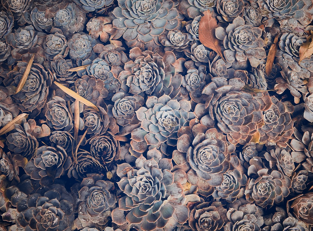 beige-and-green succulent plants pile