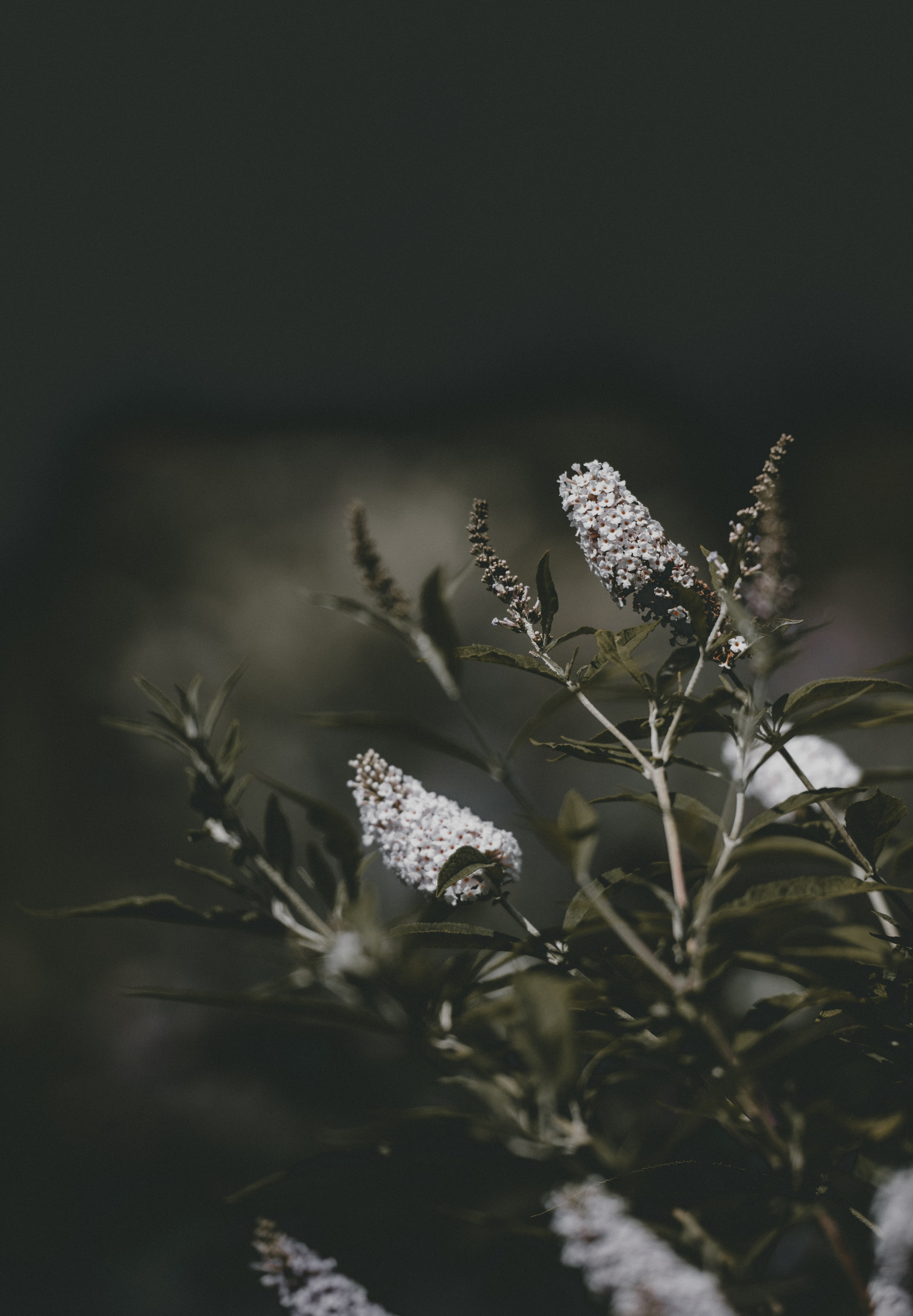 white flowers in shallow focus lens photography