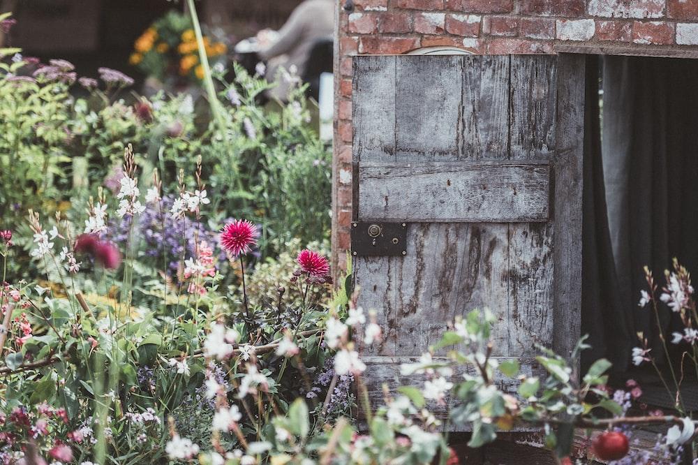 red petaled flowers beside grey wooden door