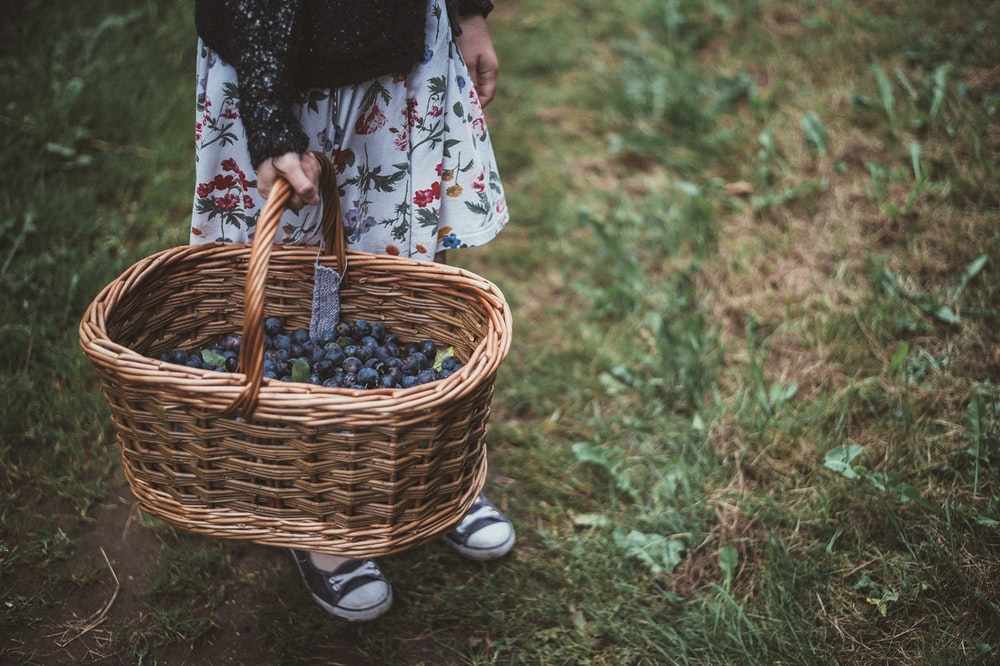 person holding basket with berries