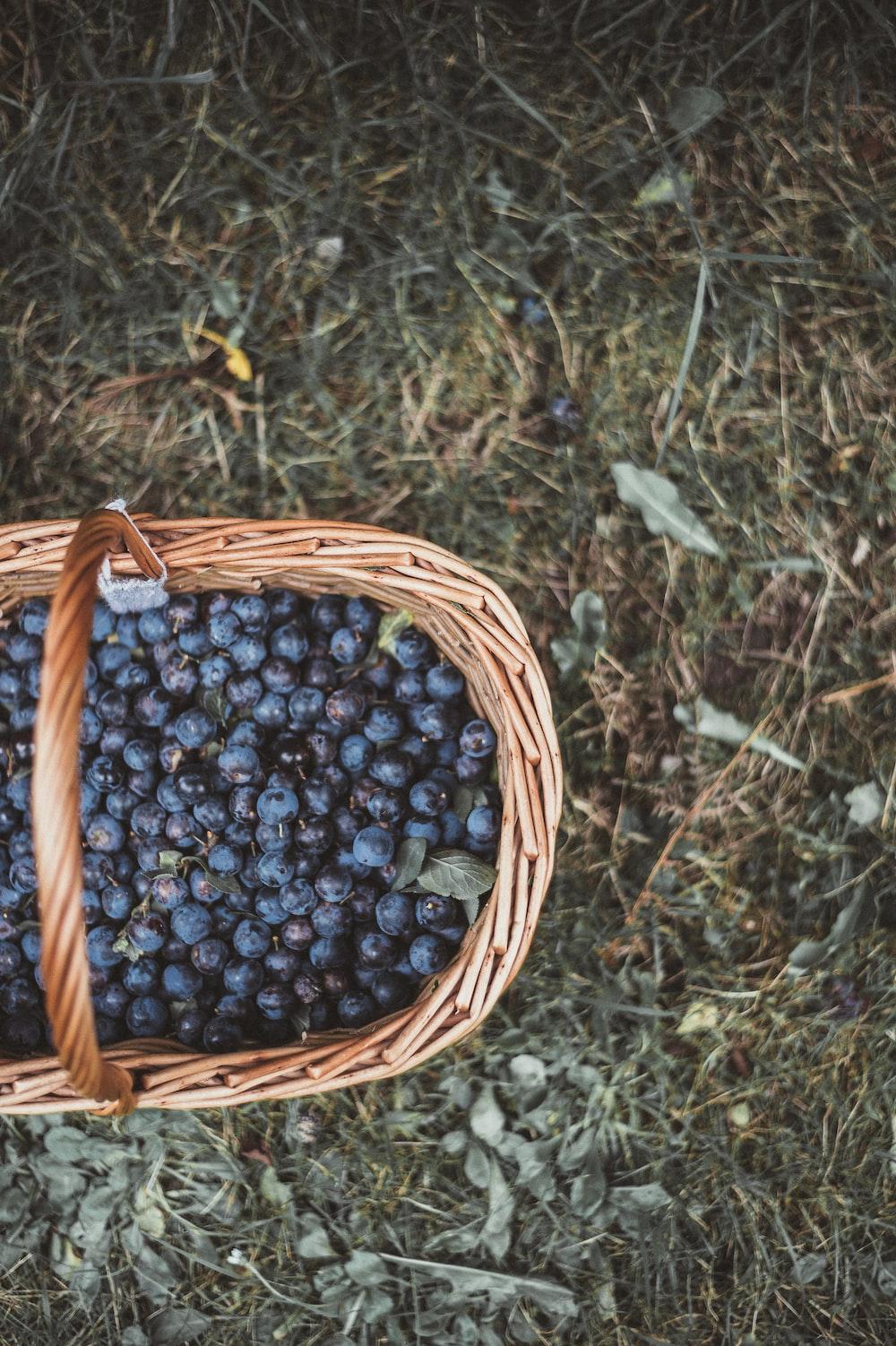 Deep Basket – Best Way to Pick Fruits