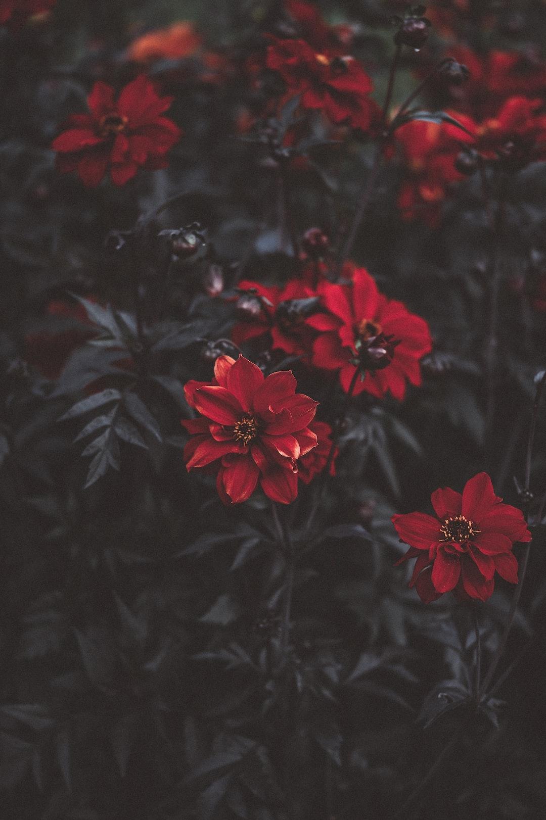 4794. Virágok