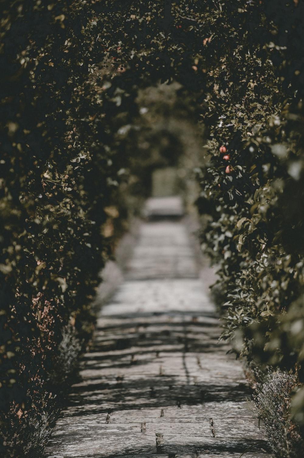 gray road between green leafed bush