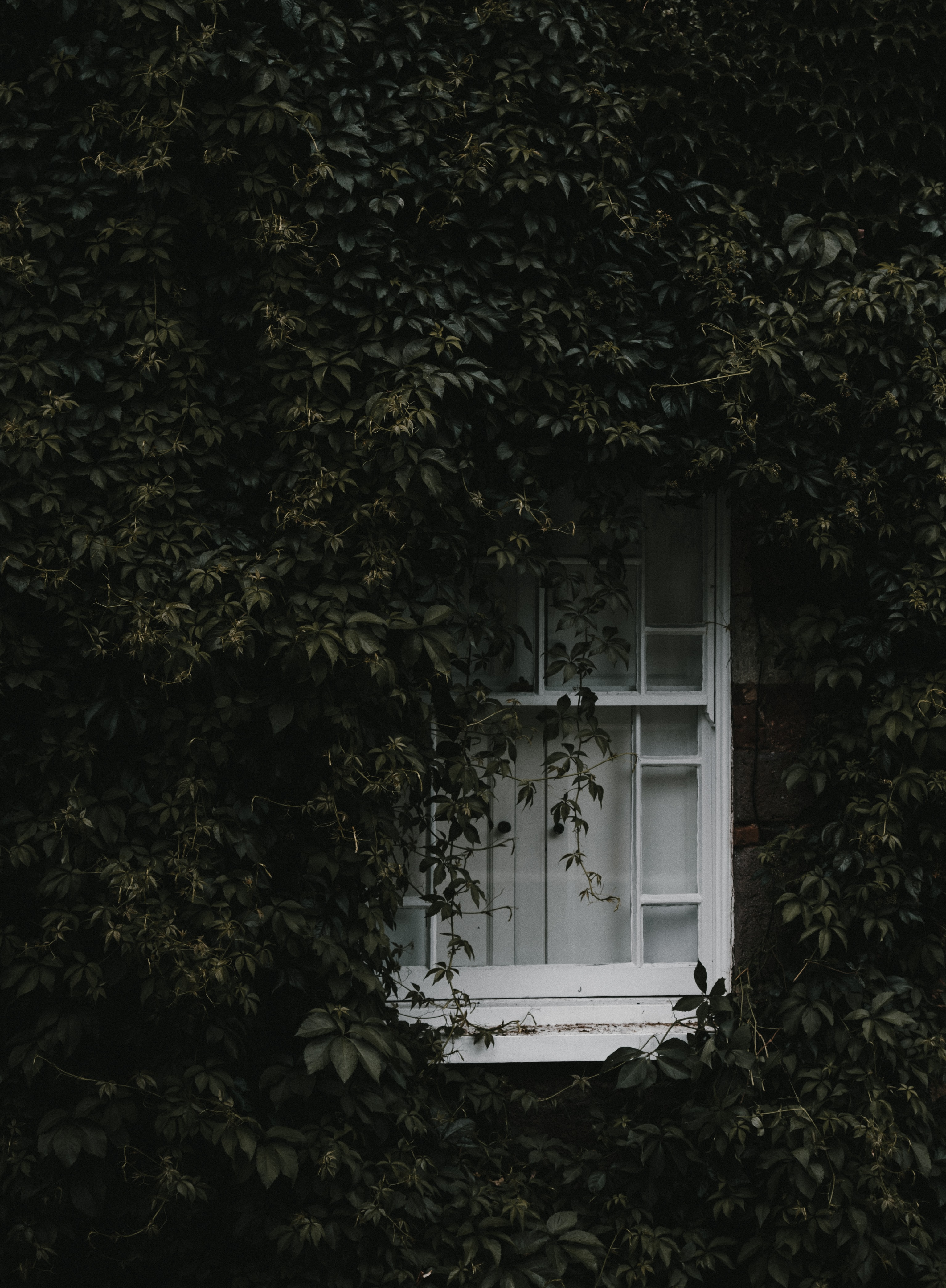 white wooden window surrounded by green vines