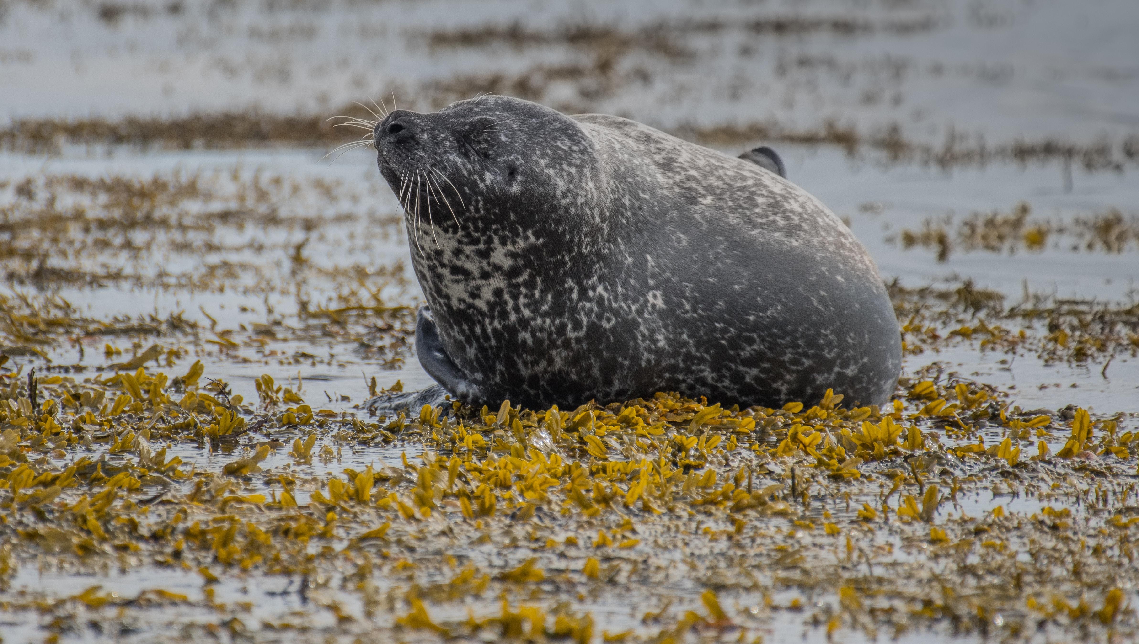 black seal on water