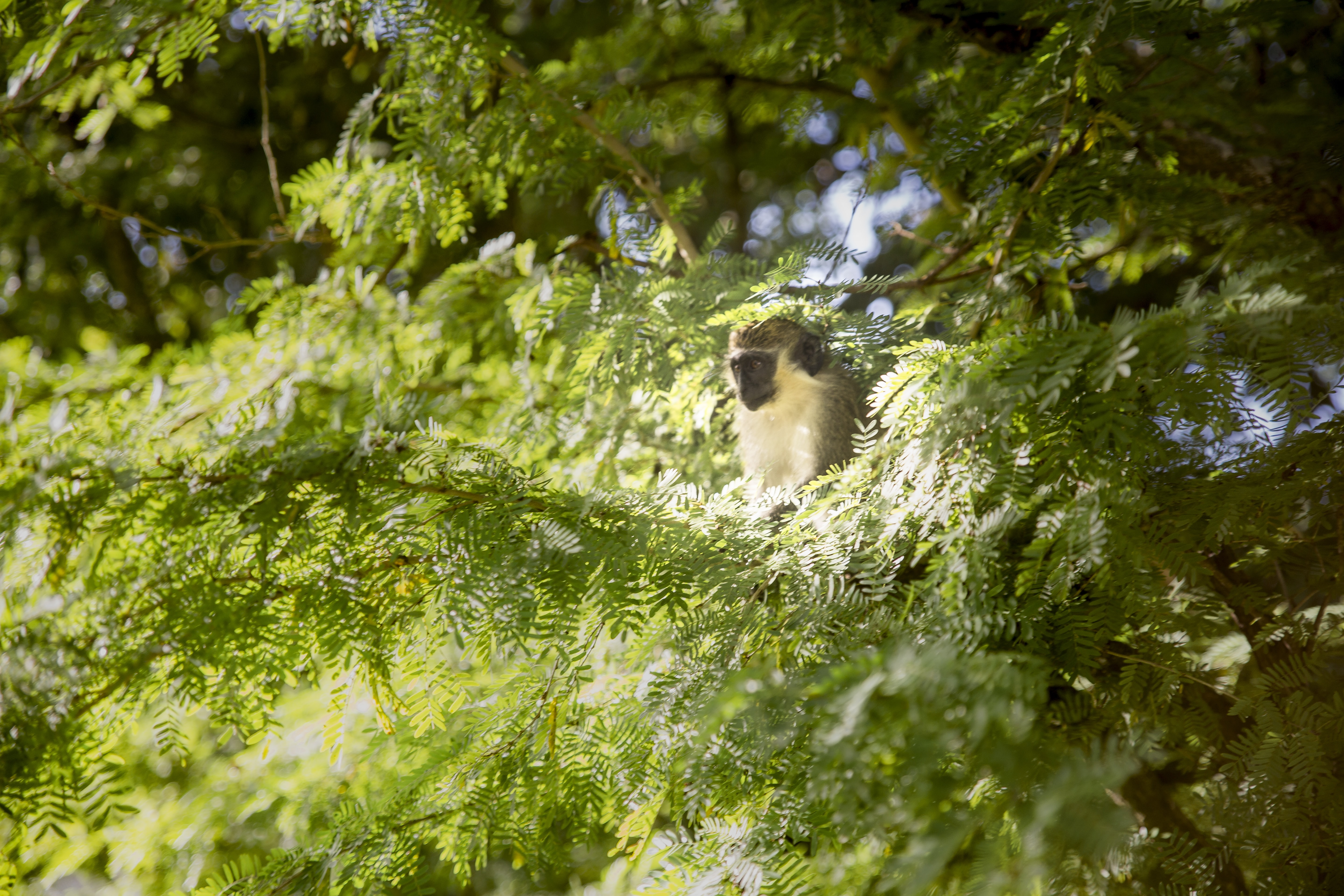 brown monkey on tree during day time
