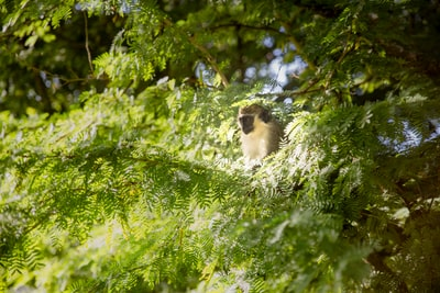 brown monkey on tree during day time barbados teams background